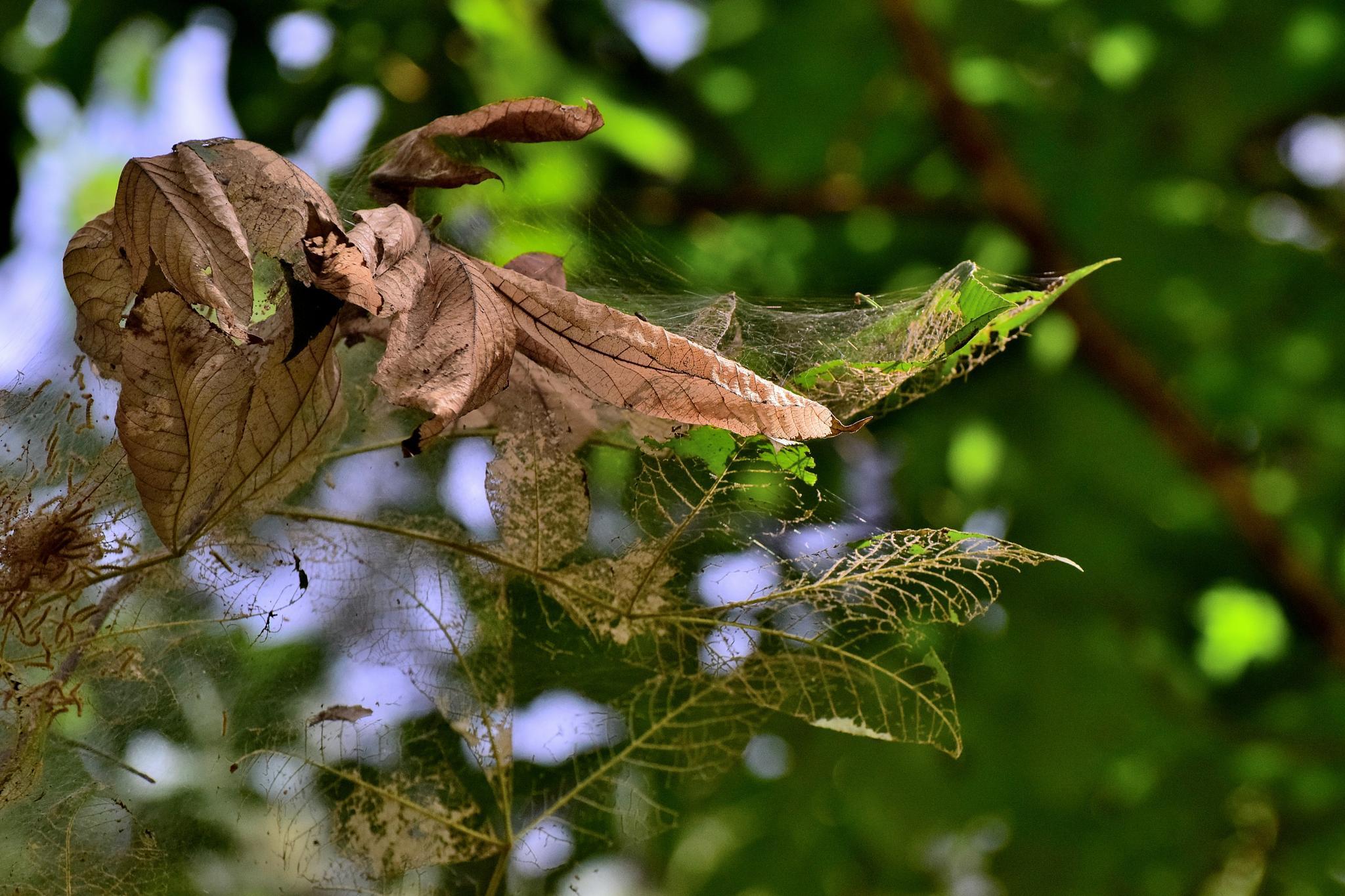 Todays Art 1219~Skeleton Leaves by Lawrence Scott Hess