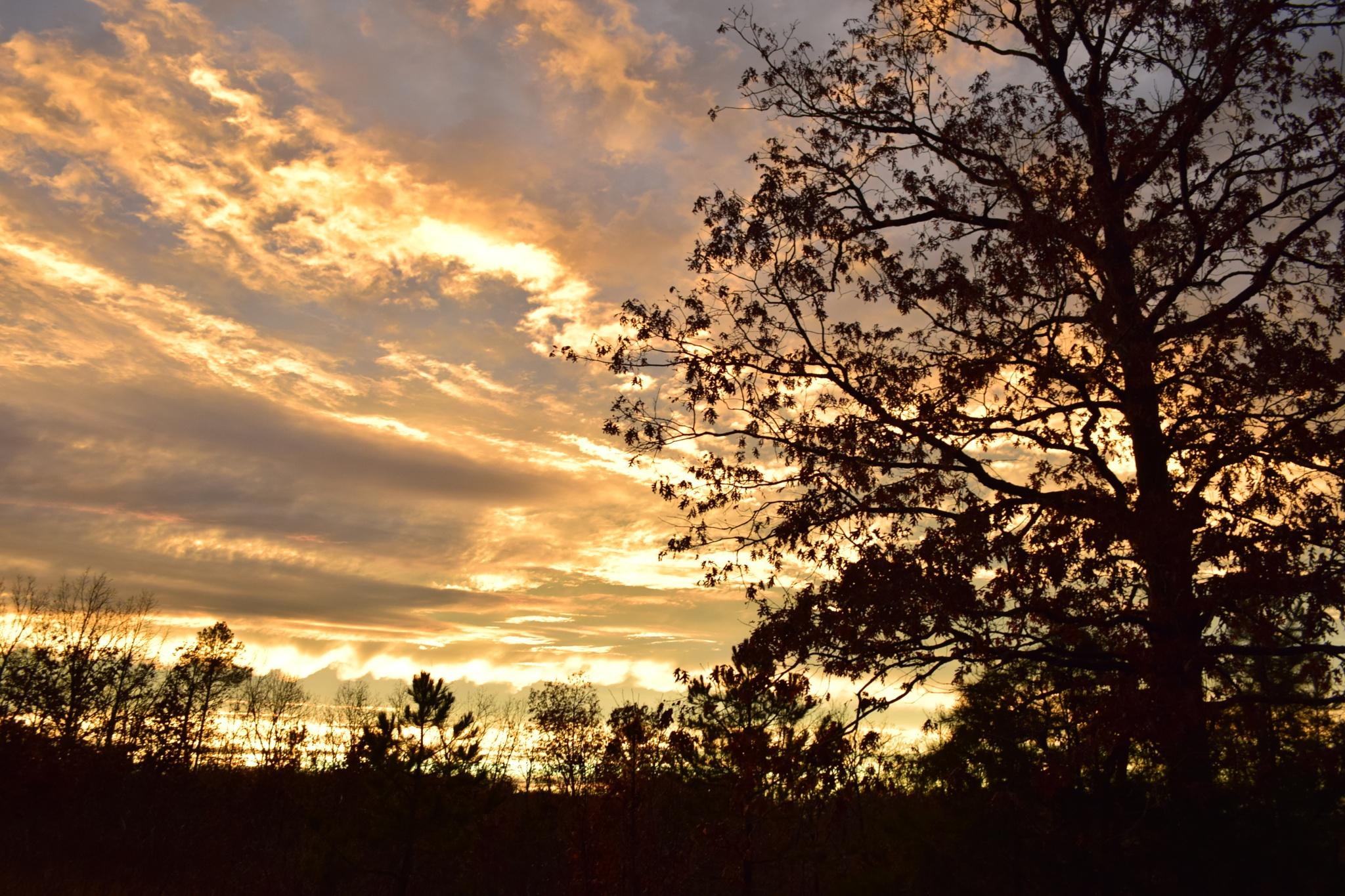 Todays Art 1946~Country Arkansas Sunset 4 by Lawrence Scott Hess