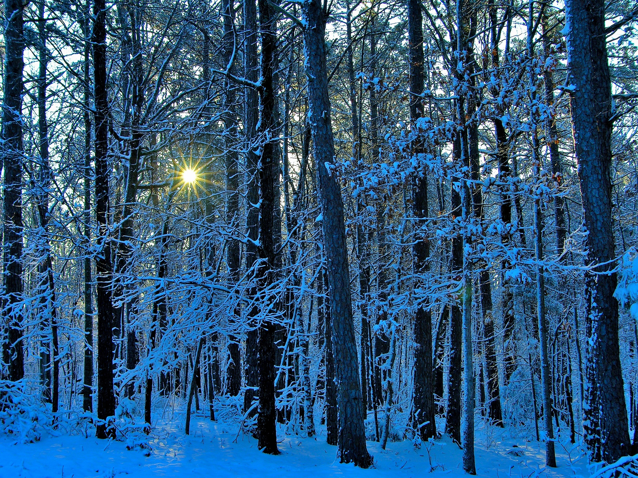 Snow 29~Winter Sun Star 2 by Lawrence Scott Hess