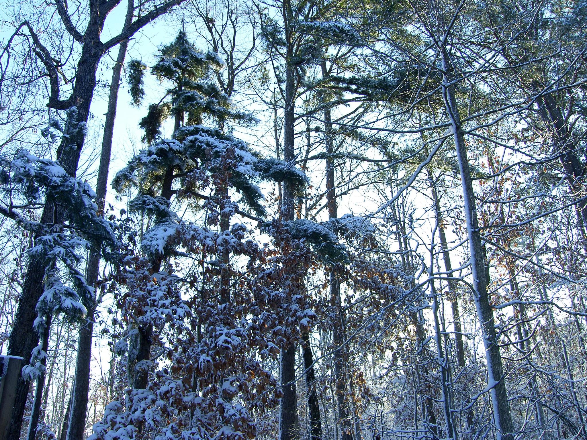 Snow 6~Winter Days by Lawrence Scott Hess
