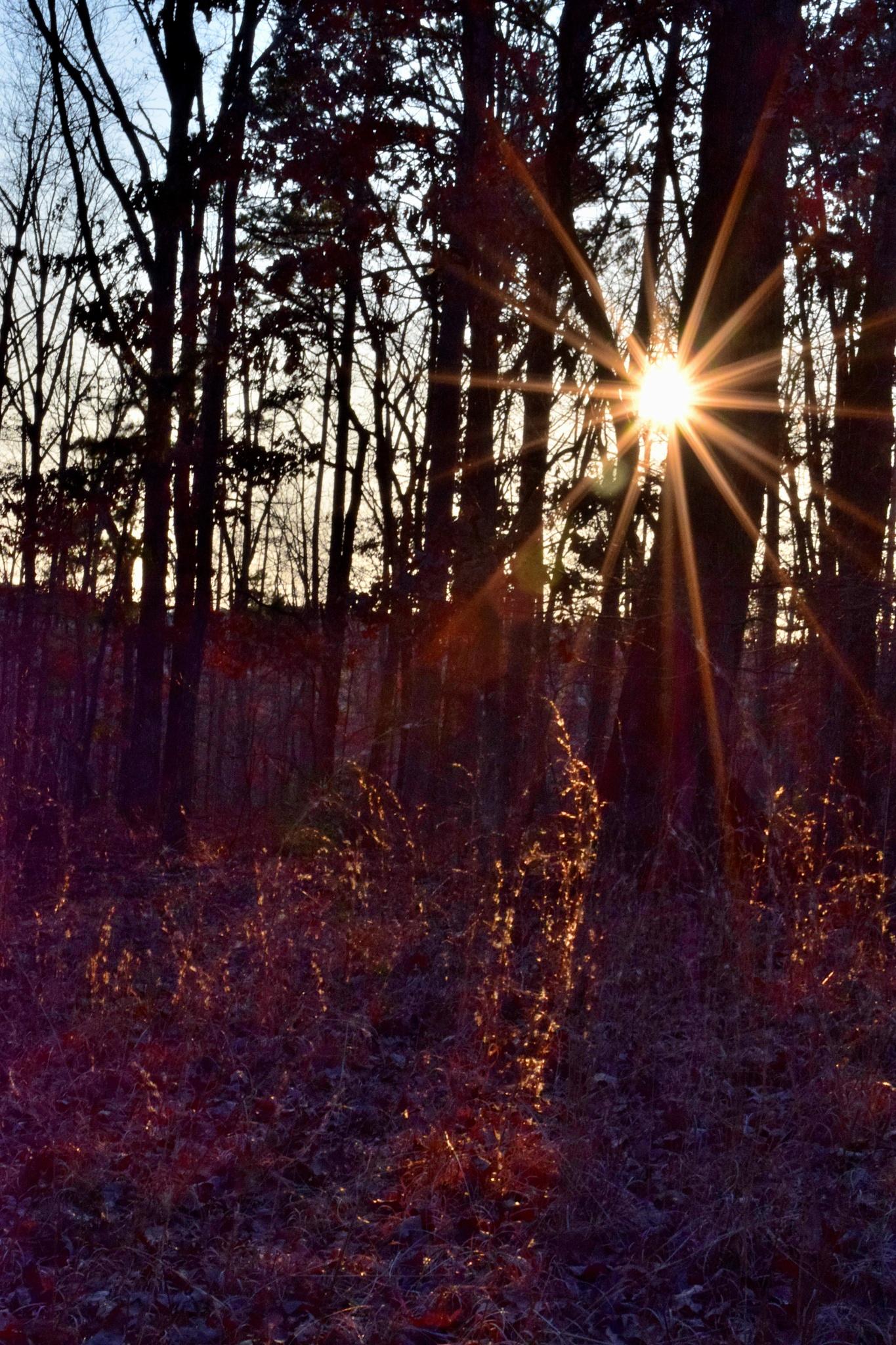 Digital Art 248~Sun Star by Lawrence Scott Hess
