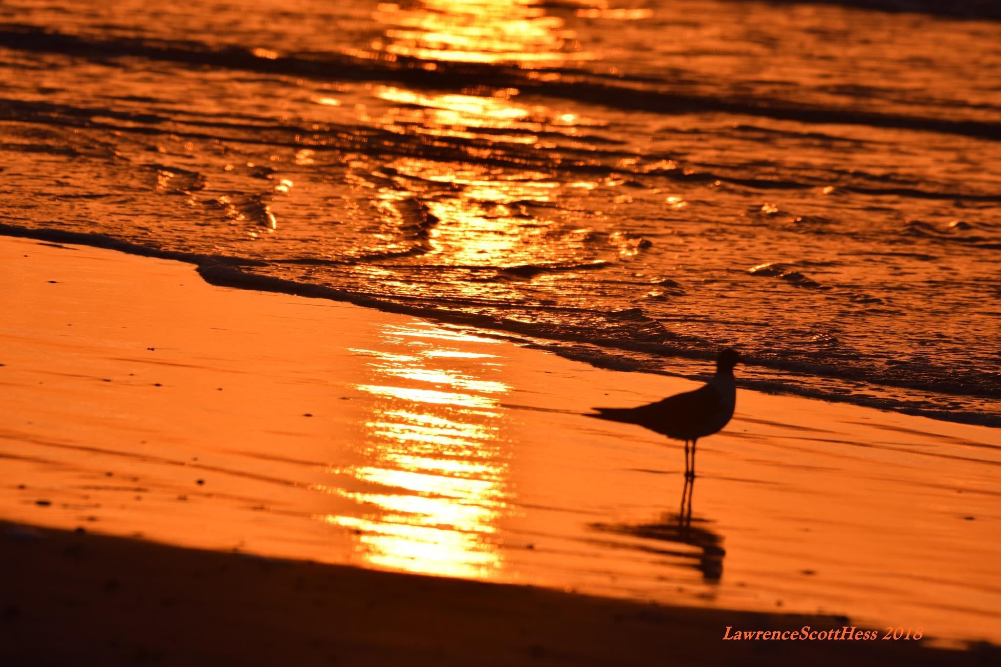 Galveston 353~Golden Waters by Lawrence Scott Hess
