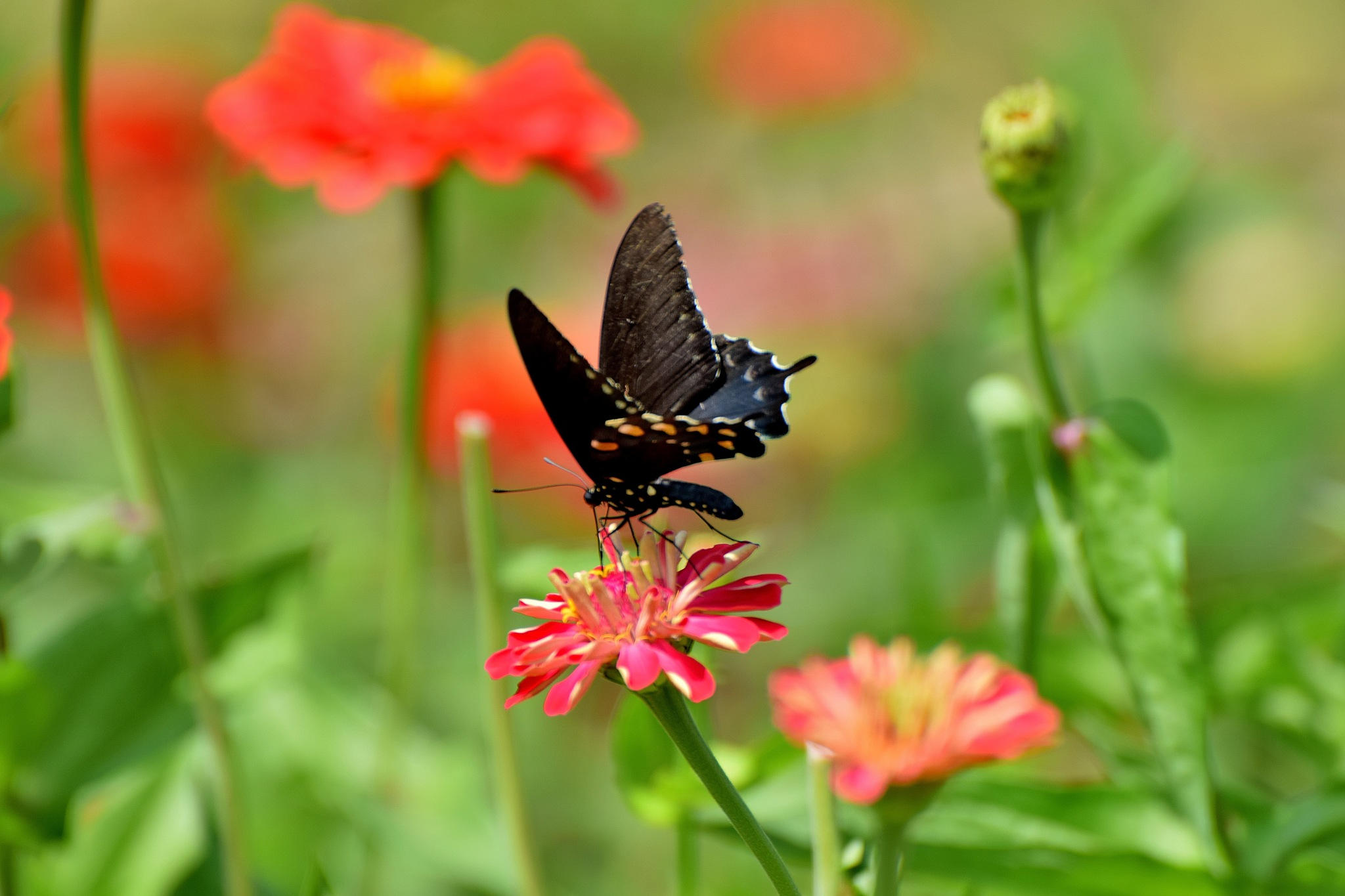 Todays Art 5549~Nature's Beauty by Lawrence Scott Hess