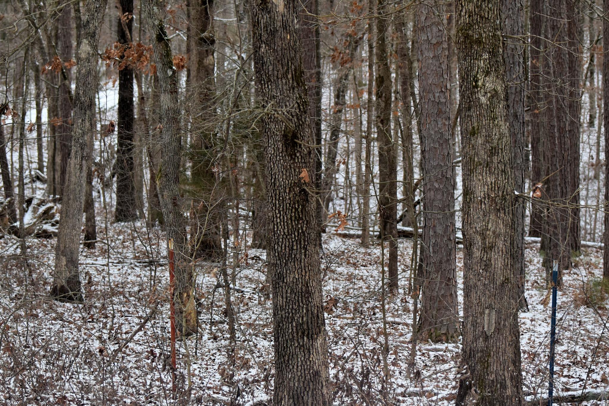 Todays Art 6104~Winter Woods by Lawrence Scott Hess