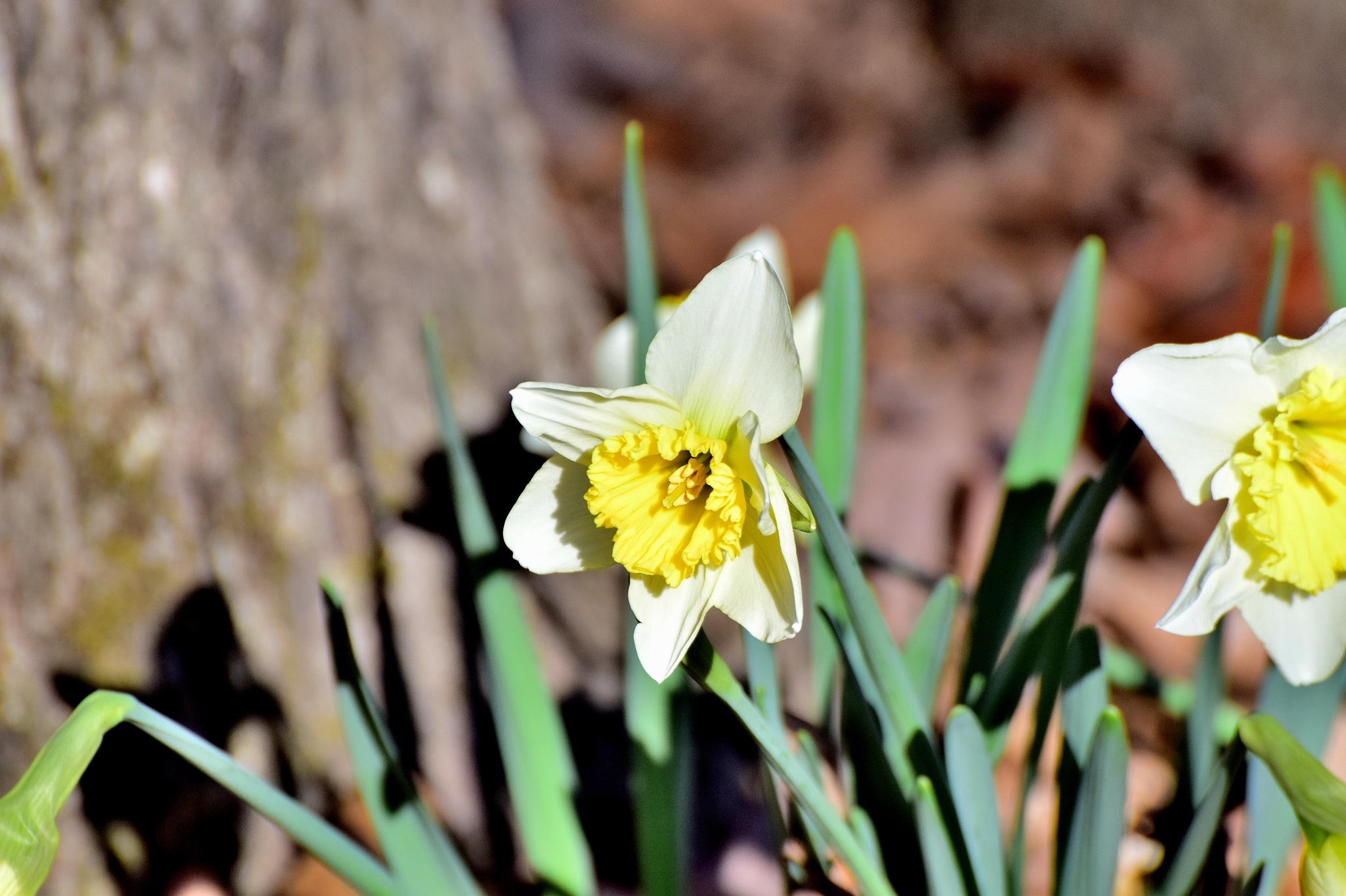 Todays Art 4041~Pretty Yellow Flowers by Lawrence Scott Hess