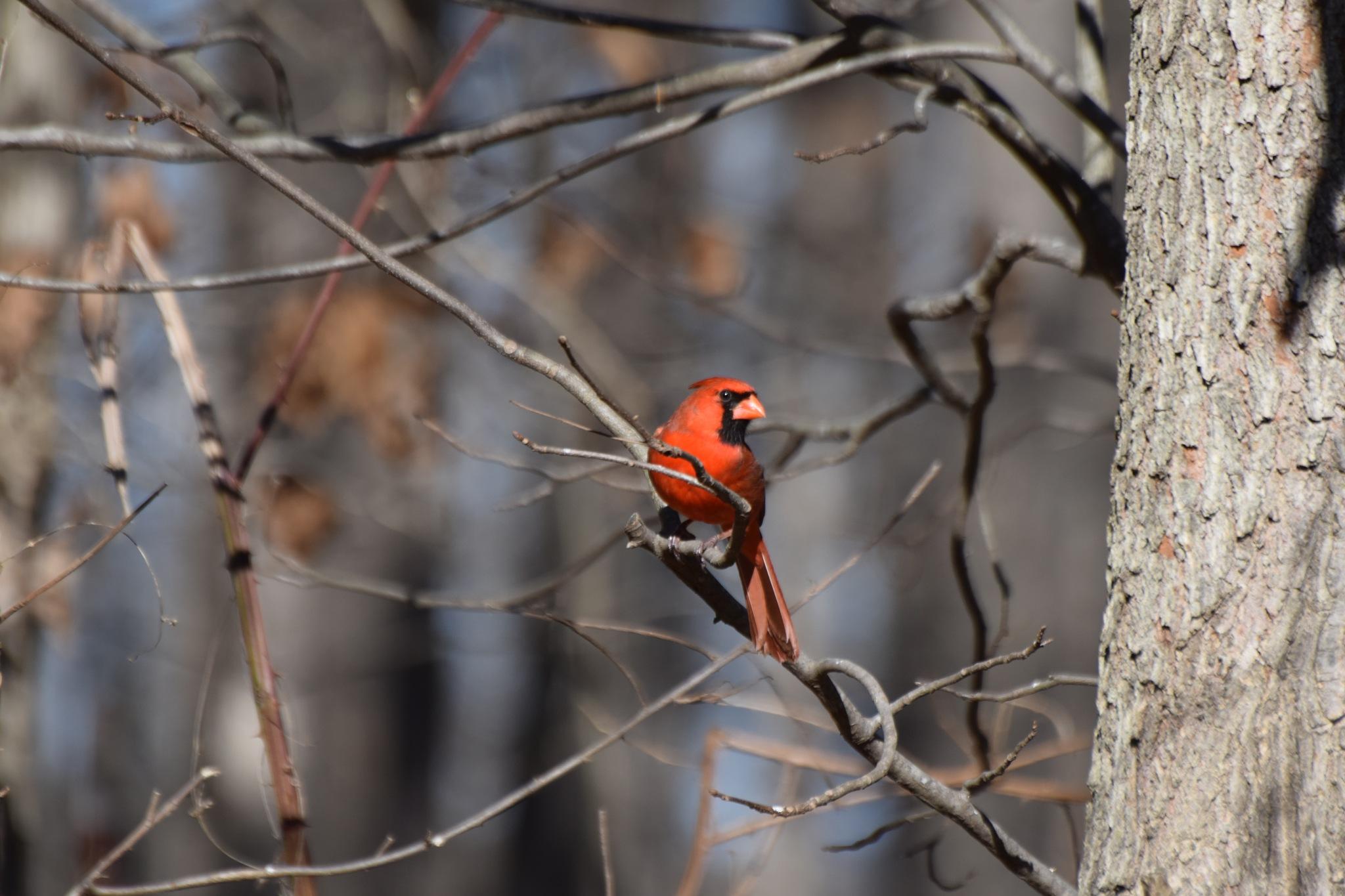 Nature's Birds 1577 by Lawrence Scott Hess