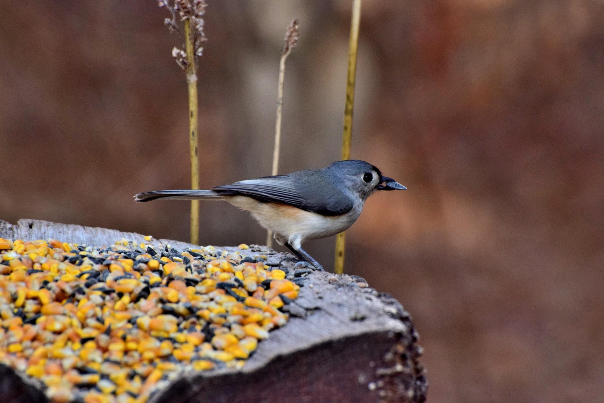 Winter Birds 266 by Lawrence Scott Hess