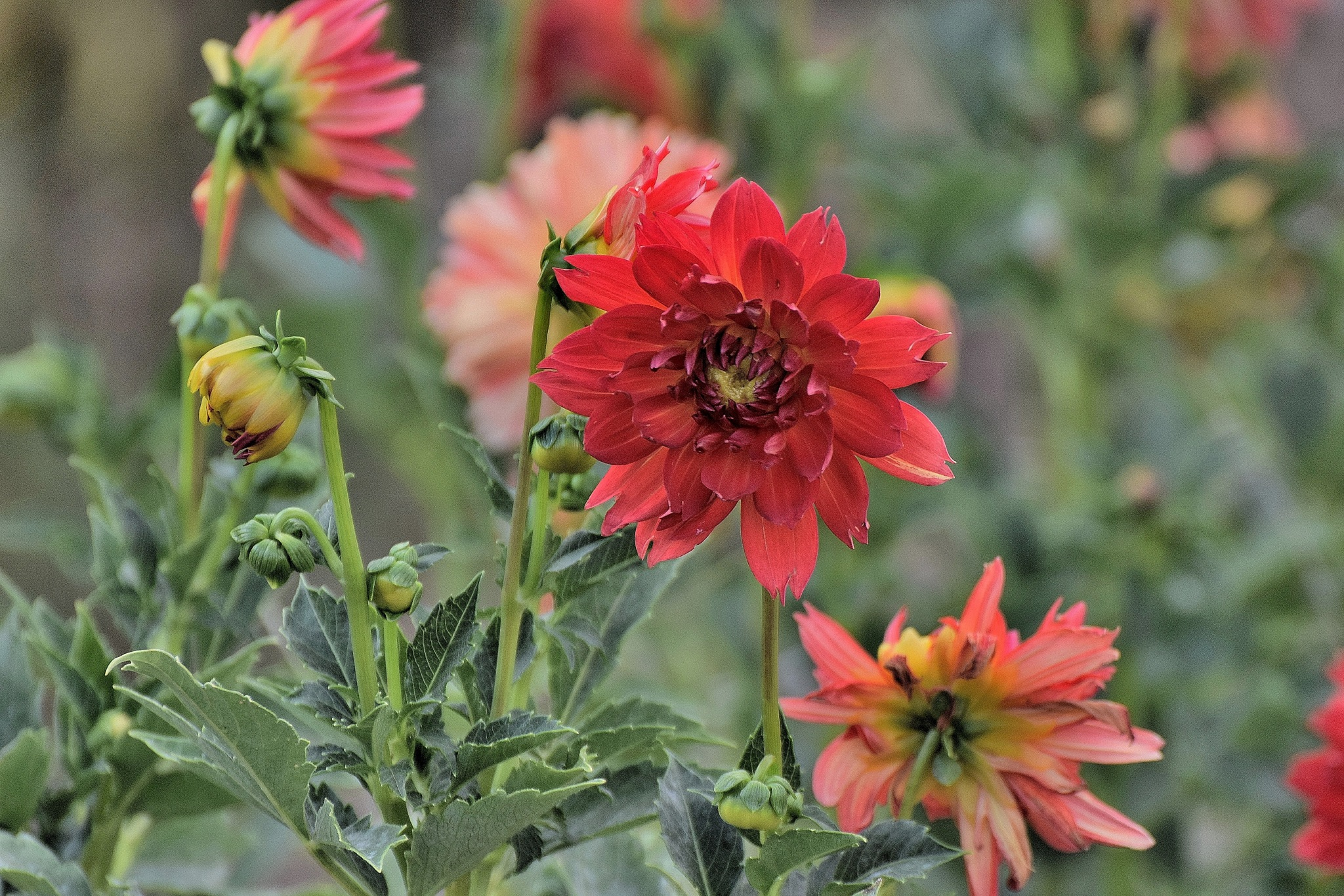 Todays Art 5528~Pretty Flowers by Lawrence Scott Hess