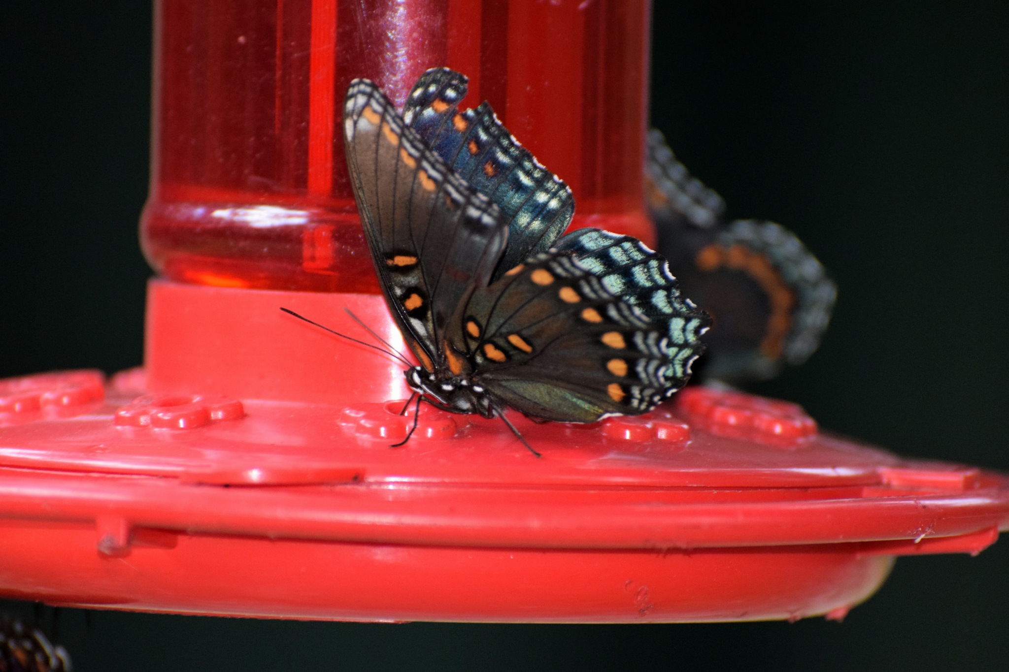 Todays Art 3428~ The Butterfly by Lawrence Scott Hess