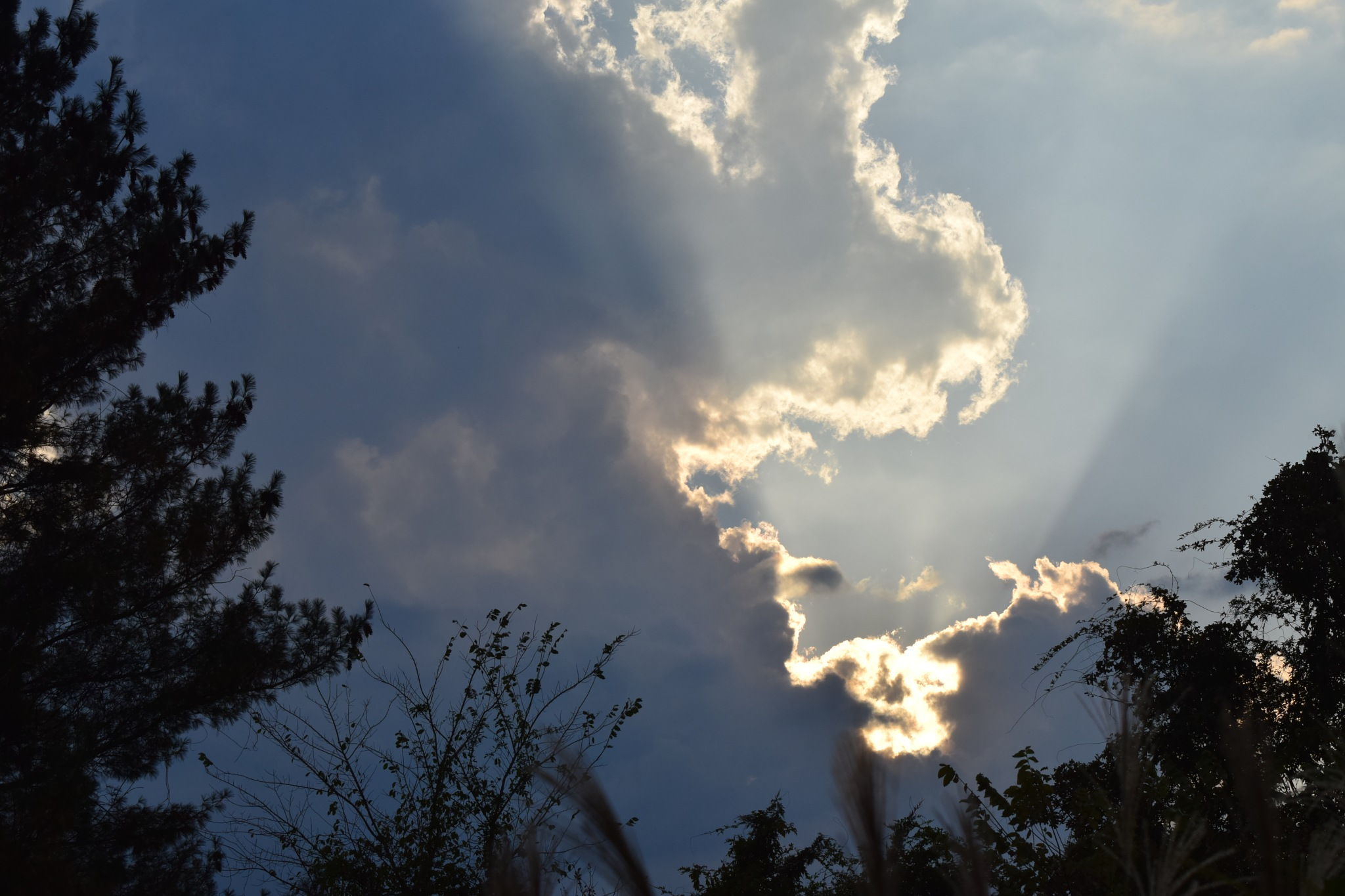 Cloud Art 48 by Lawrence Scott Hess