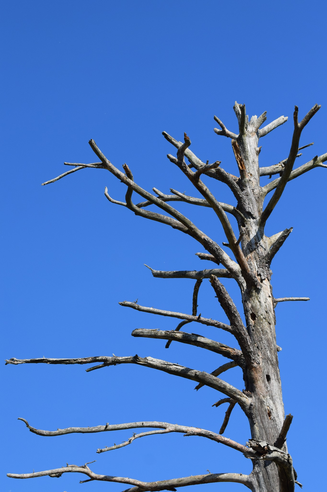 Todays Art 5530~The Dead Tree by Lawrence Scott Hess