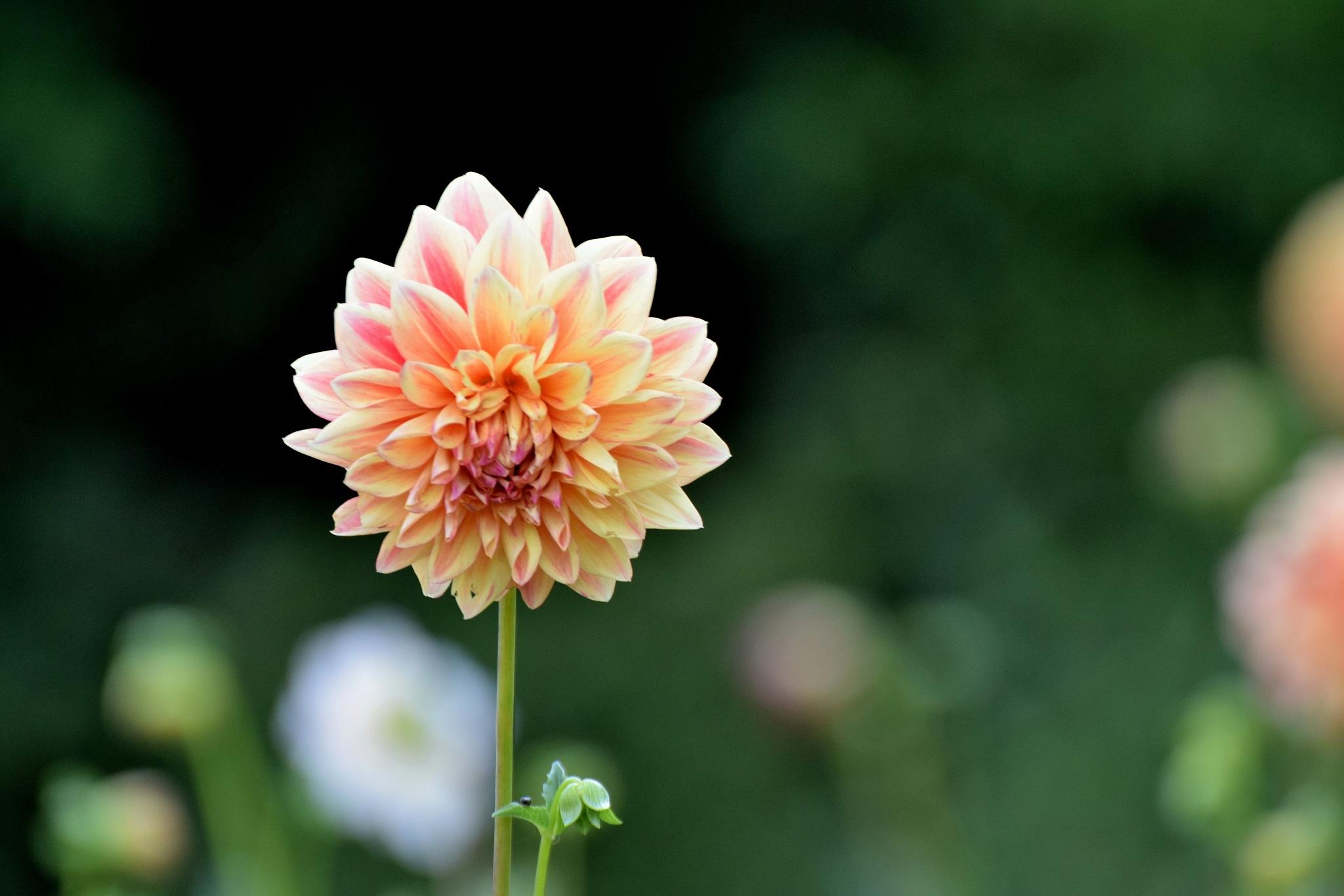 Todays Art 5552~Pretty Flowers by Lawrence Scott Hess