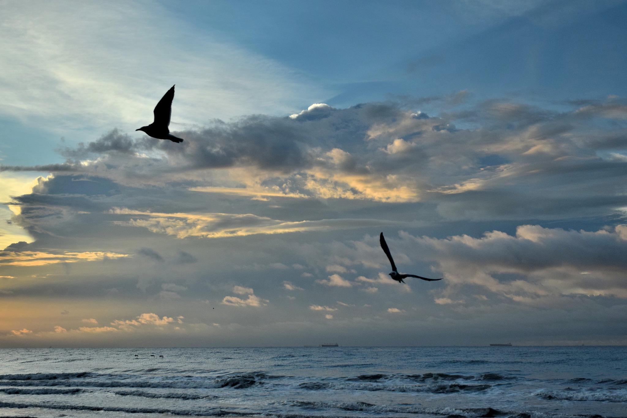 Galveston 195~ Sunrise Seagulls 2 by Lawrence Scott Hess