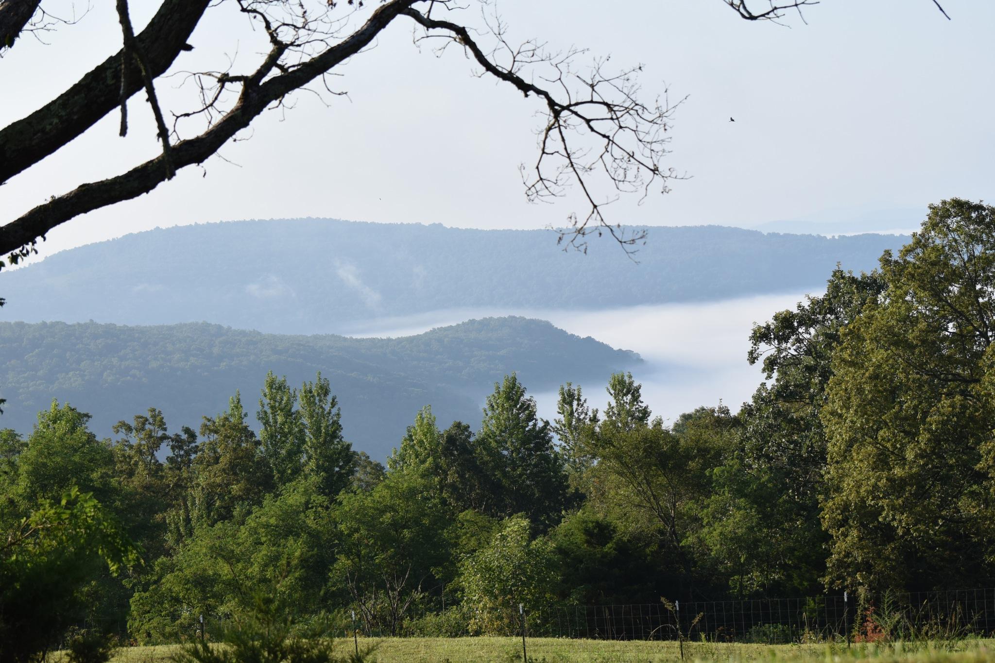 Todays Art 4990~Rolling Fog by Lawrence Scott Hess