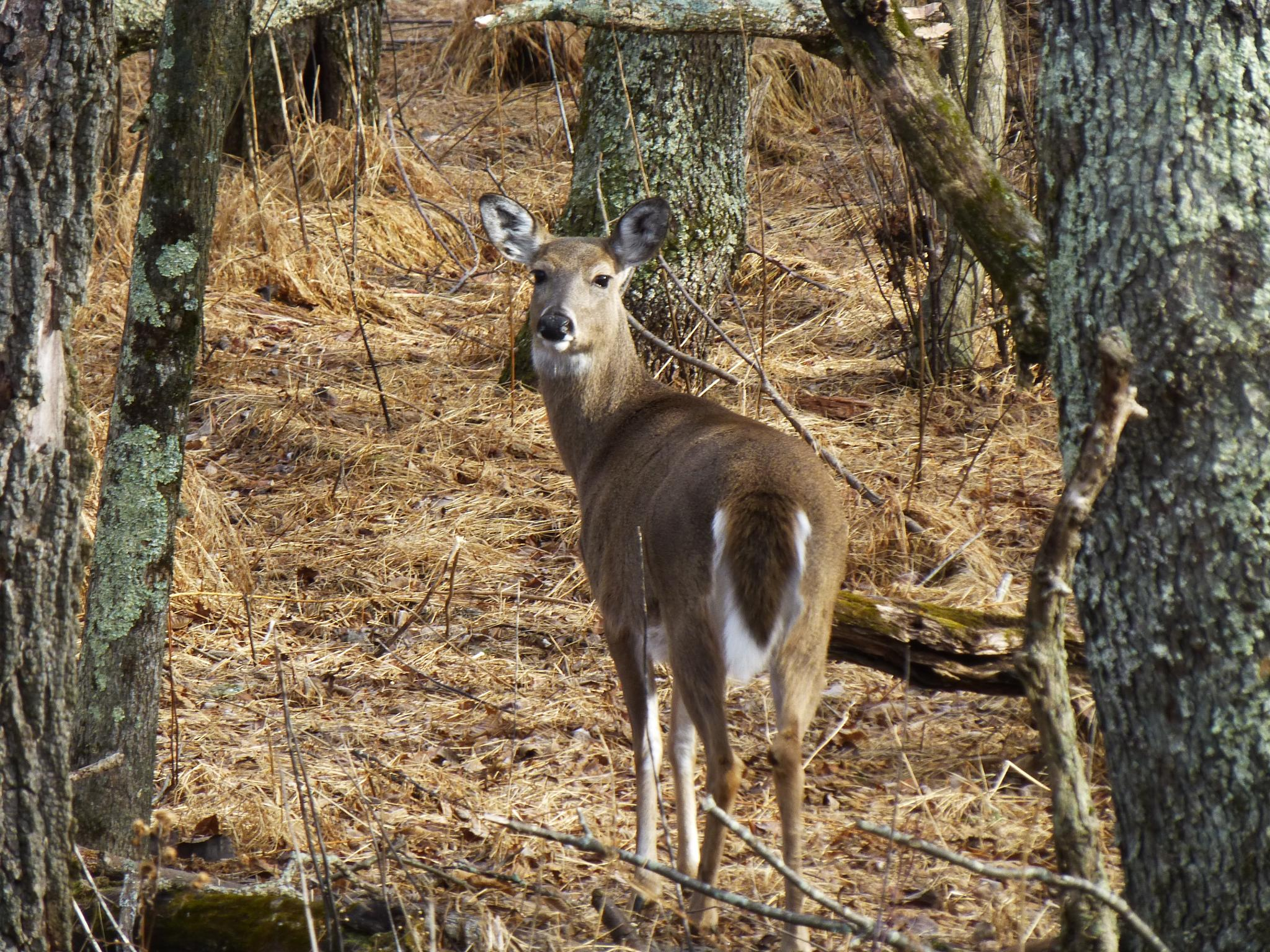 Deer Stare Back by Clark L. Roberts