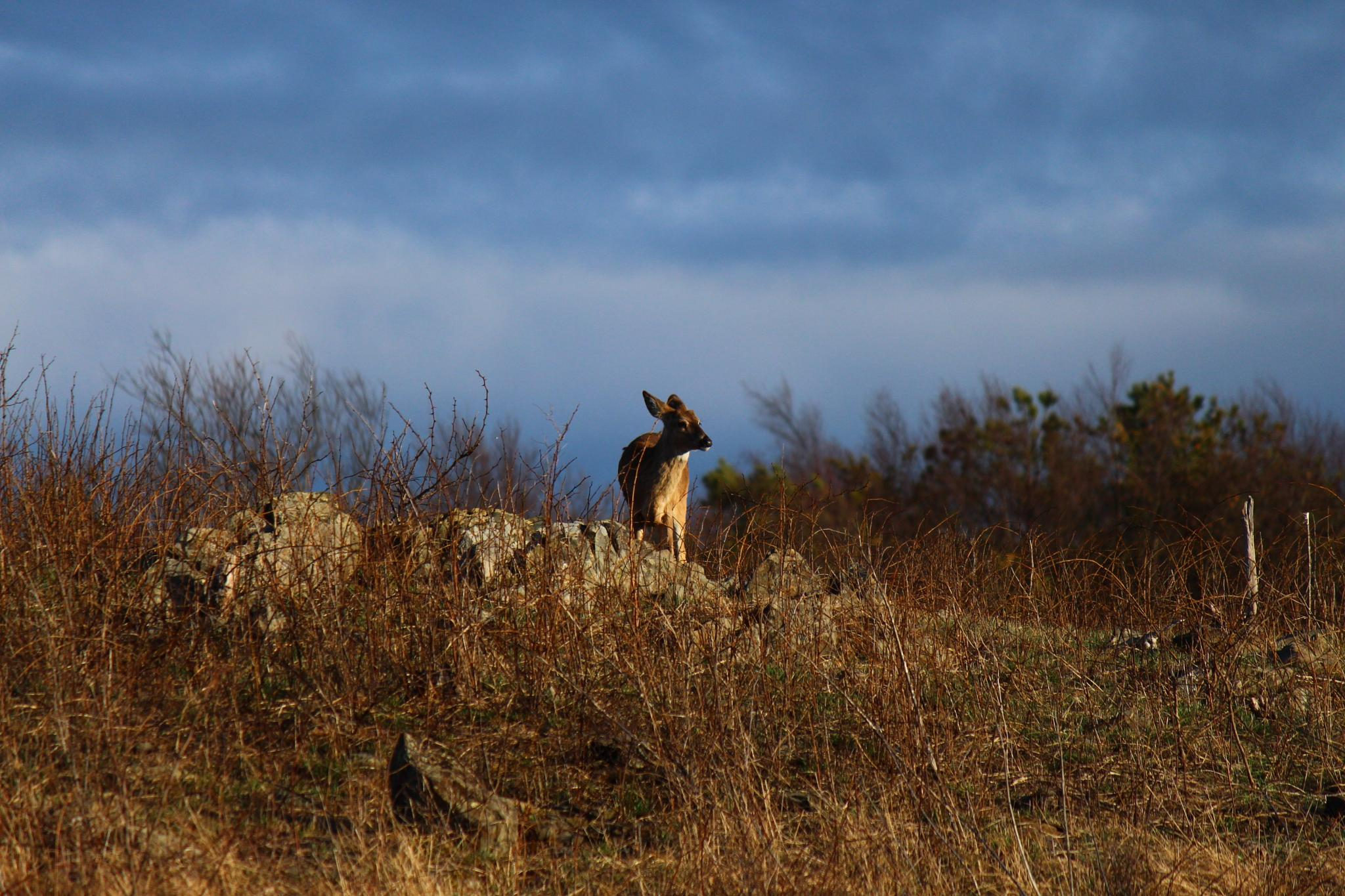 The king of the mountain... Well sort of. by Clark L. Roberts