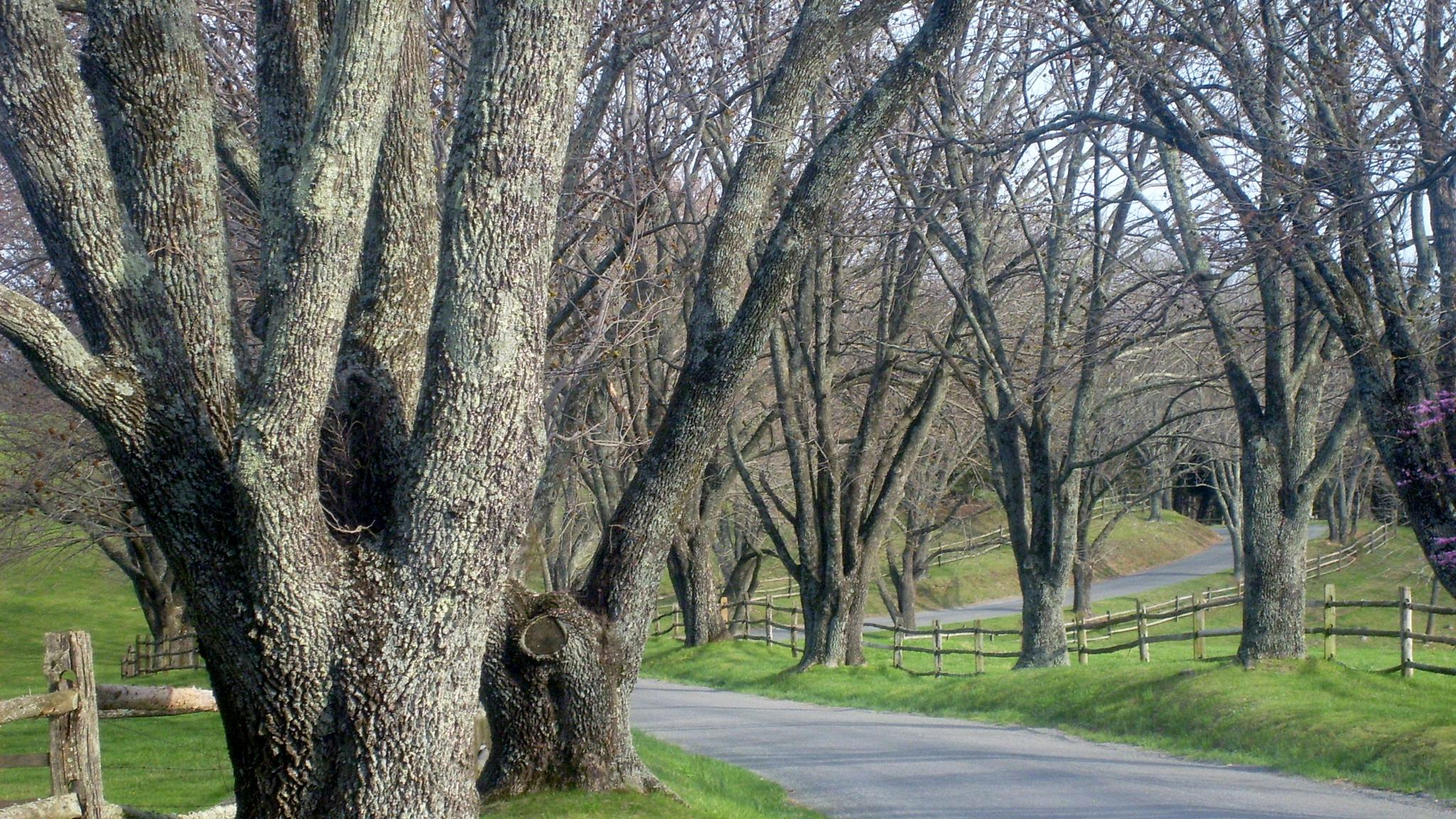 Ash Lawn's driveway by Clark L. Roberts