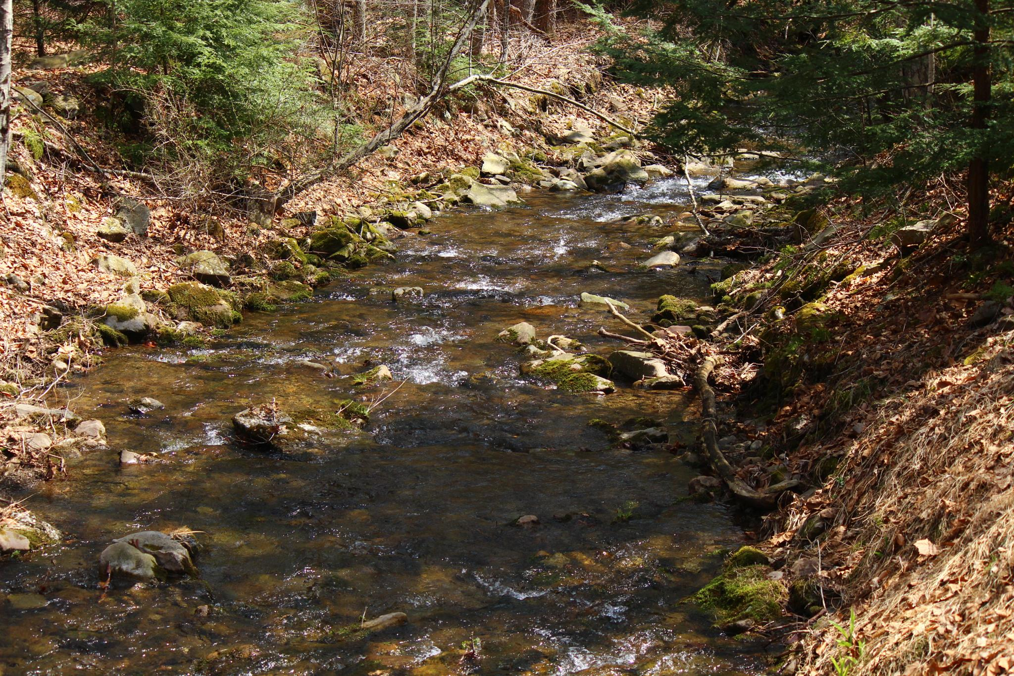 Small creek in Elk Country PA by Clark L. Roberts
