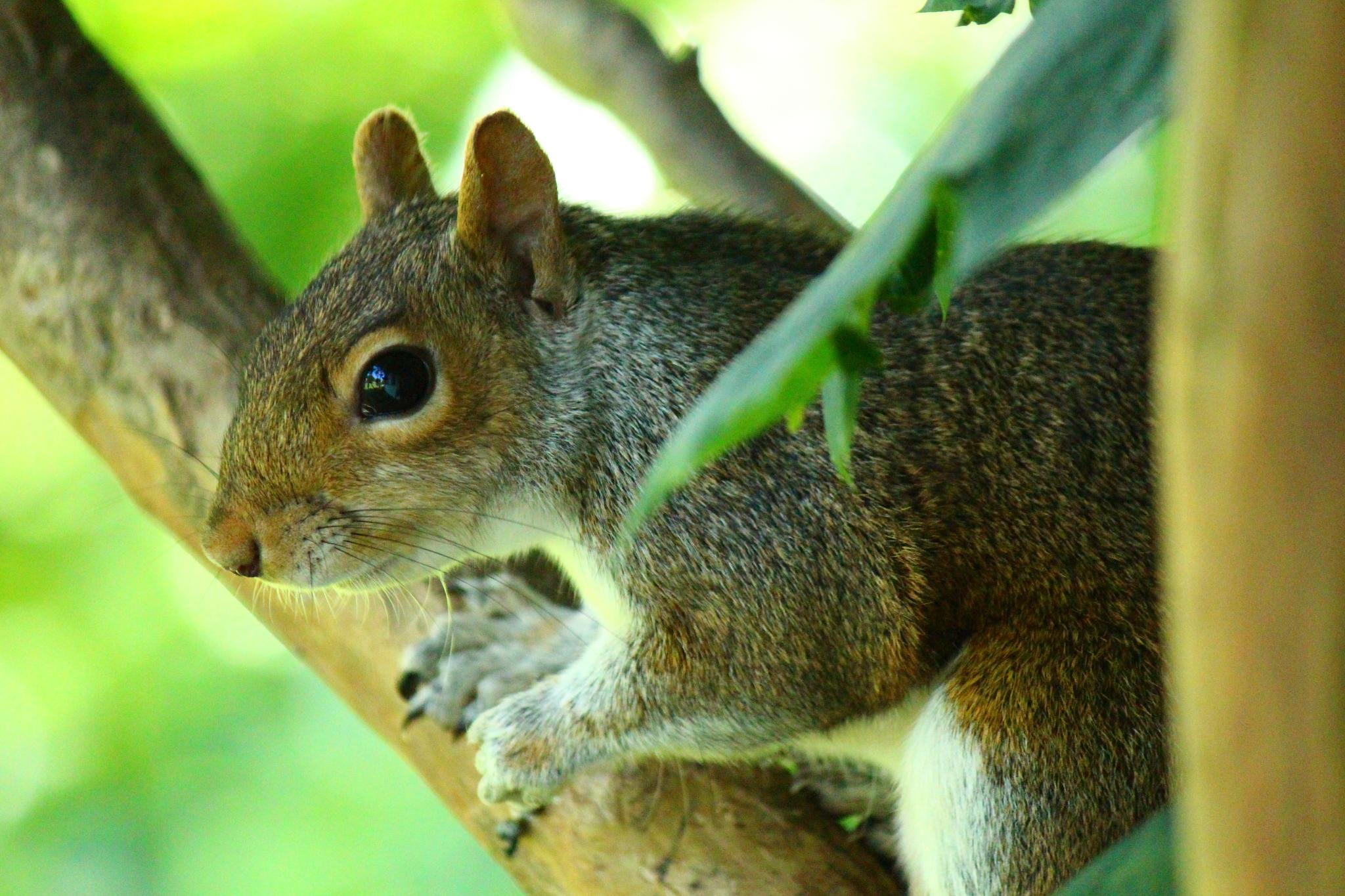 Squirrel stare by Clark L. Roberts