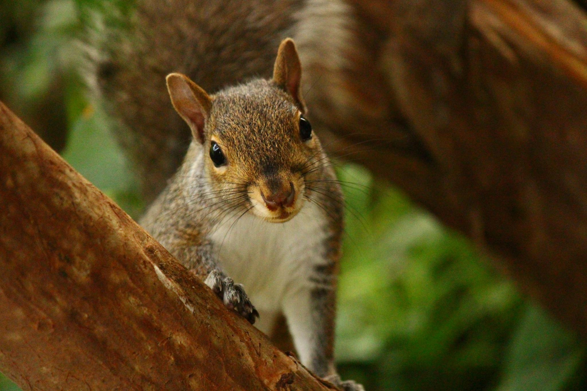 Squirrel cuteness by Clark L. Roberts