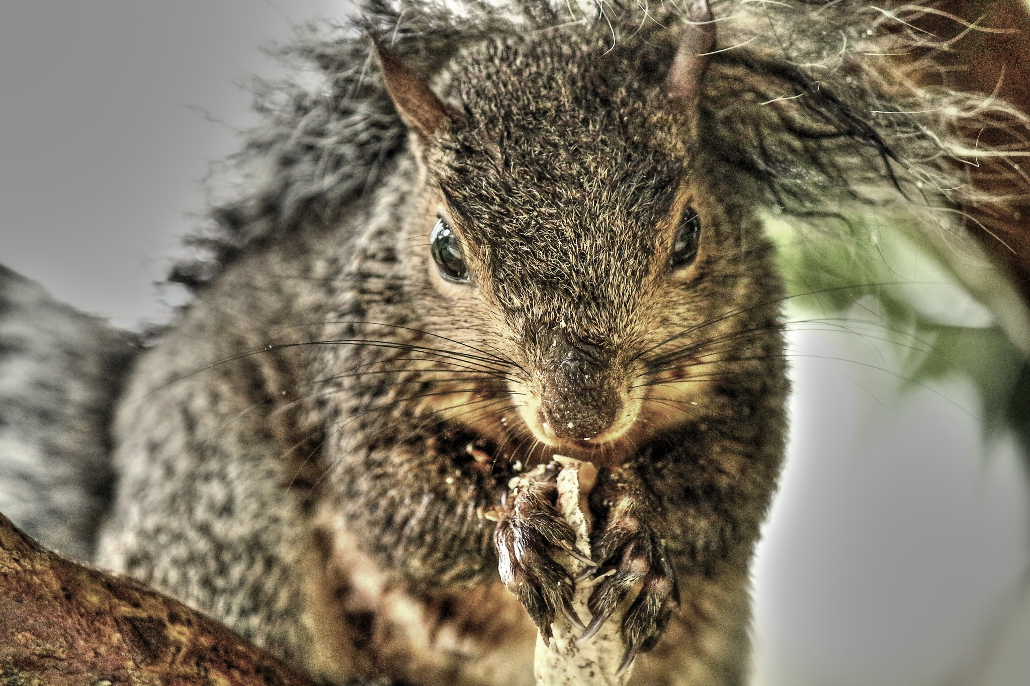 Hurricane rains and a happy squirrel by Clark L. Roberts
