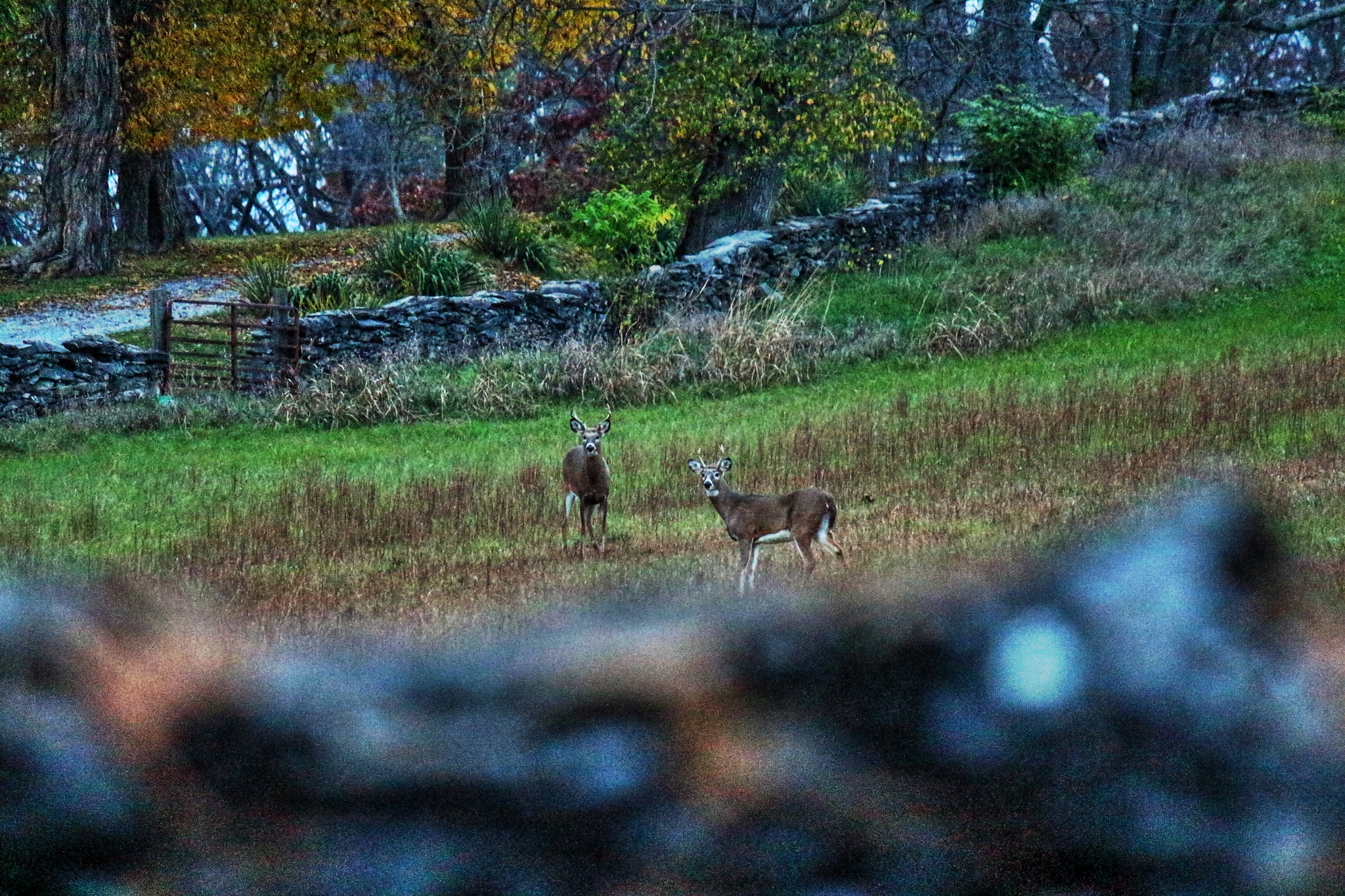 Bucks in the field by Clark L. Roberts