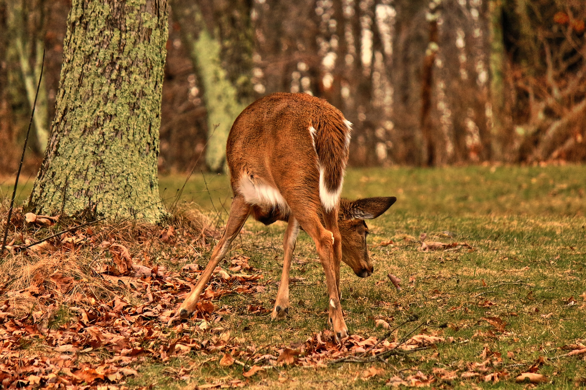 Bambi? by Clark L. Roberts