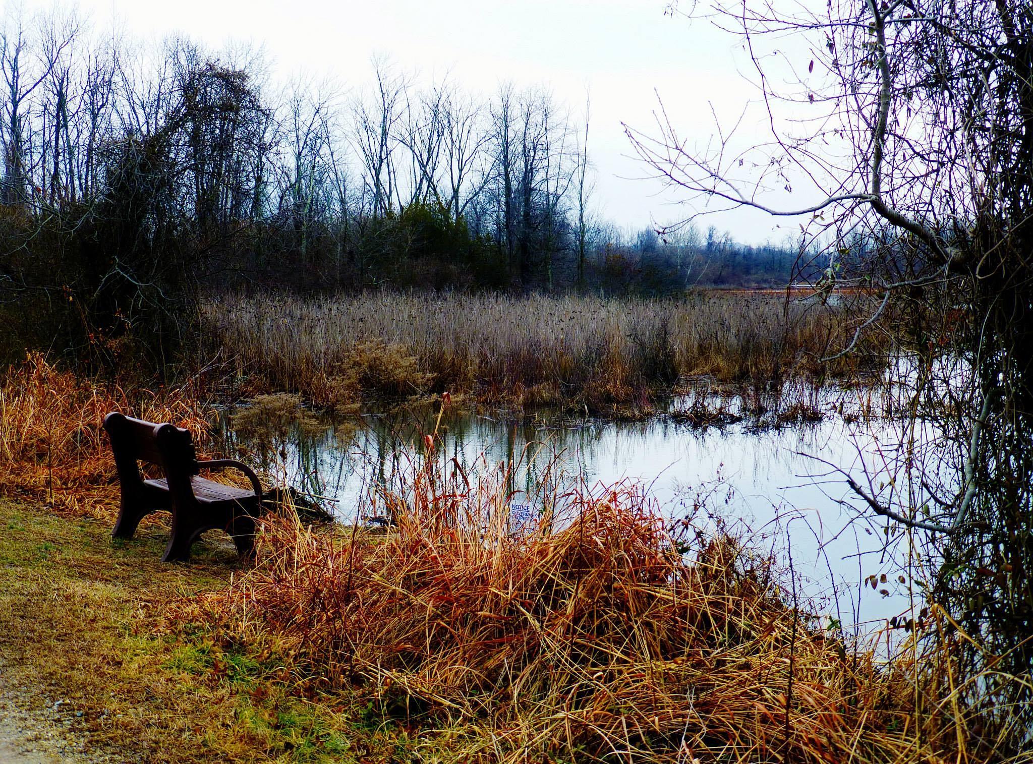 Wetlands by Catherine Wegener