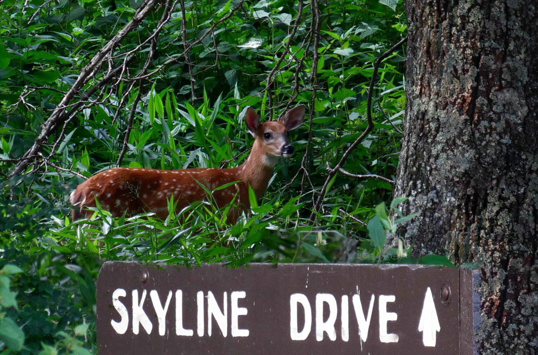 Welcome To Skyline Drive by Catherine Wegener