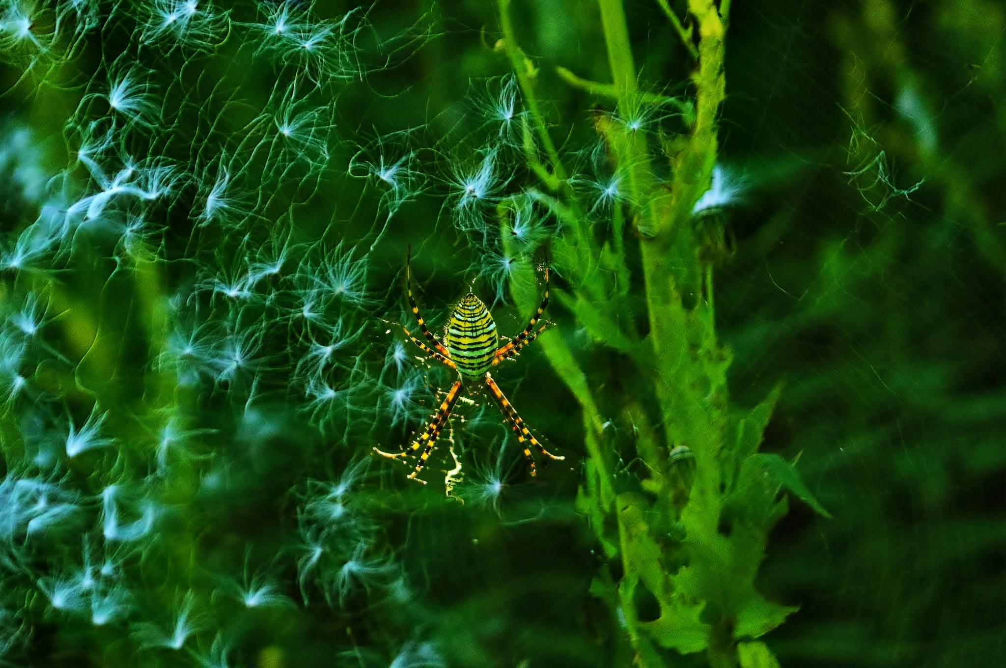 Spider and Dandelion by Catherine Wegener