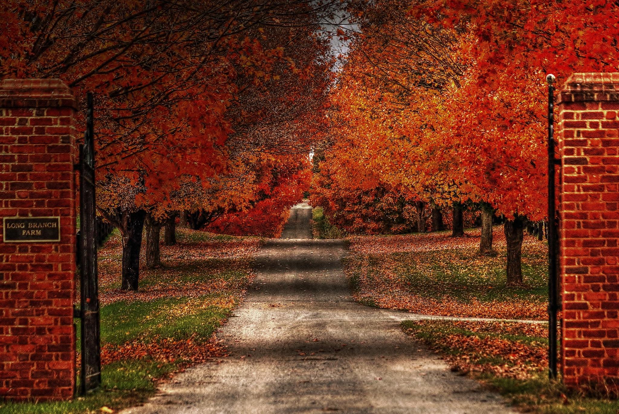 A Beautiful Drive Home by Catherine Wegener