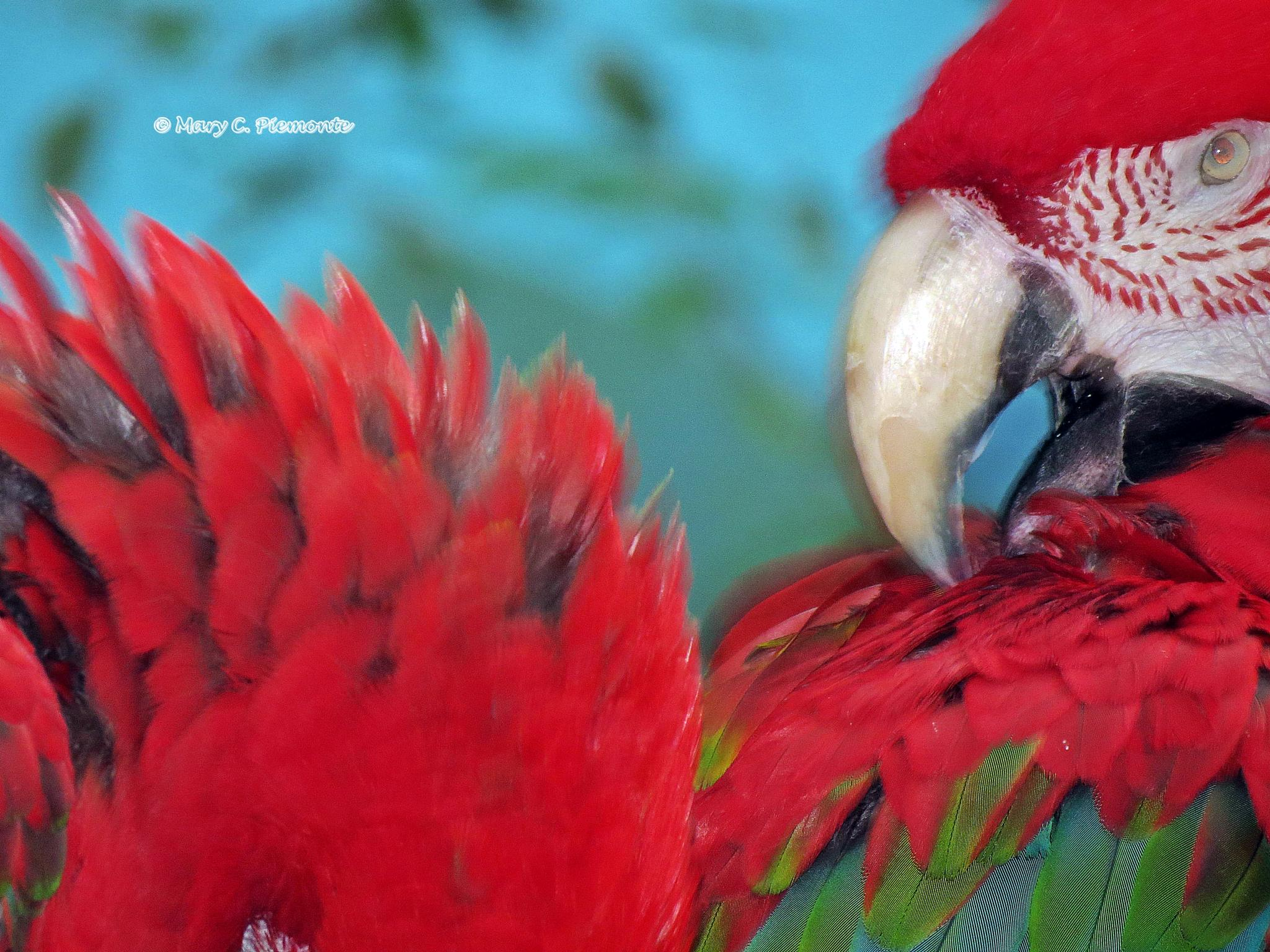 Tropical Bird by Catchietales