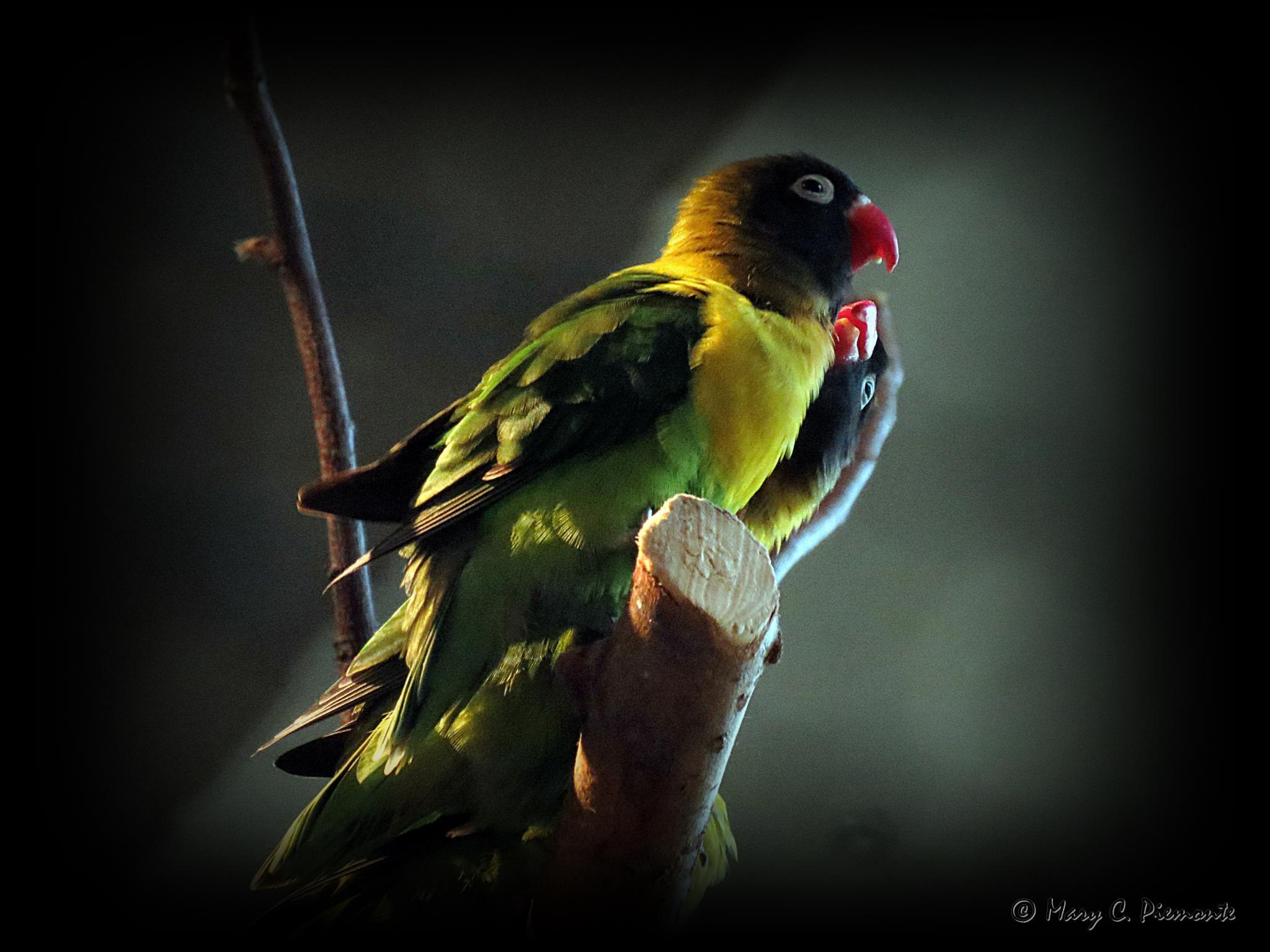 Love Birds by Catchietales