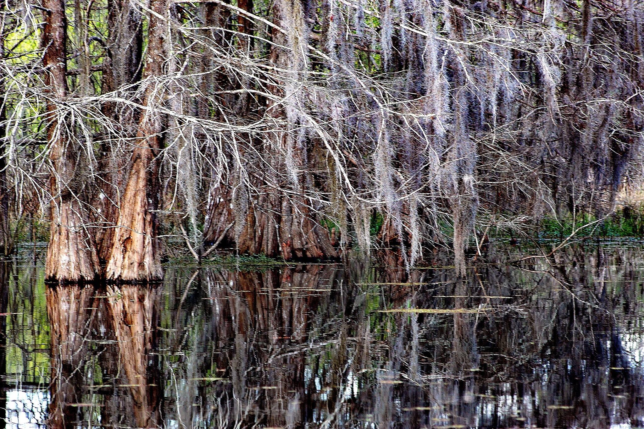 Photo in Random #cypress #river #florida #mystical #nature #water