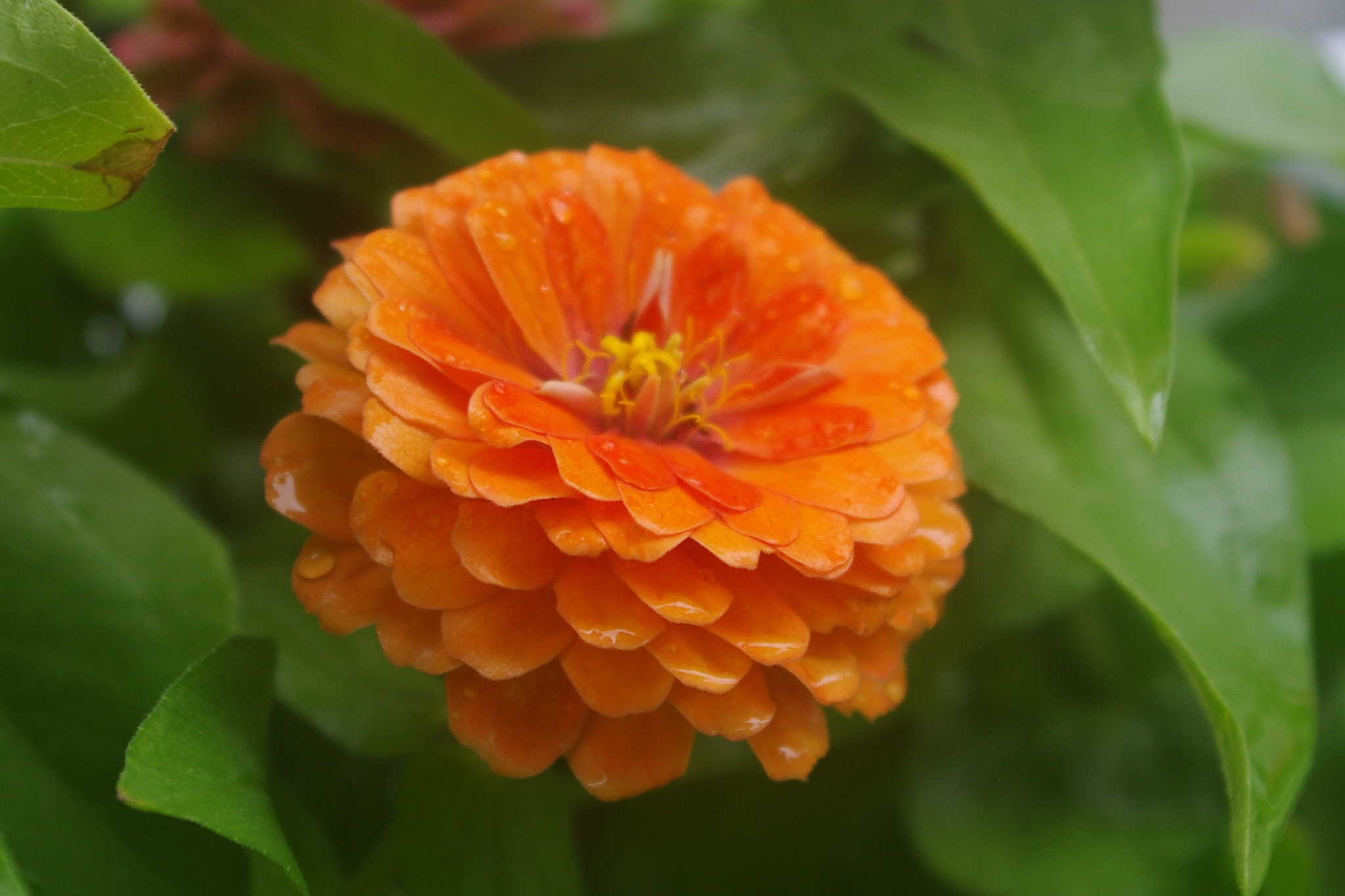 Summer beauty by denise.bouvier.3