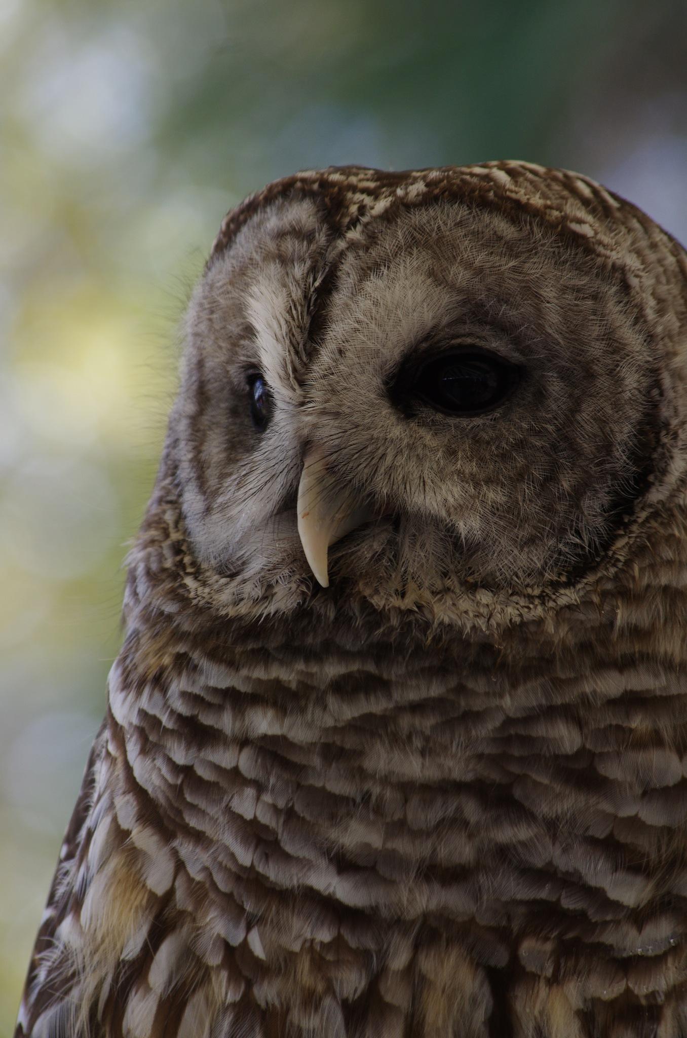 mr owl by denise.bouvier.3