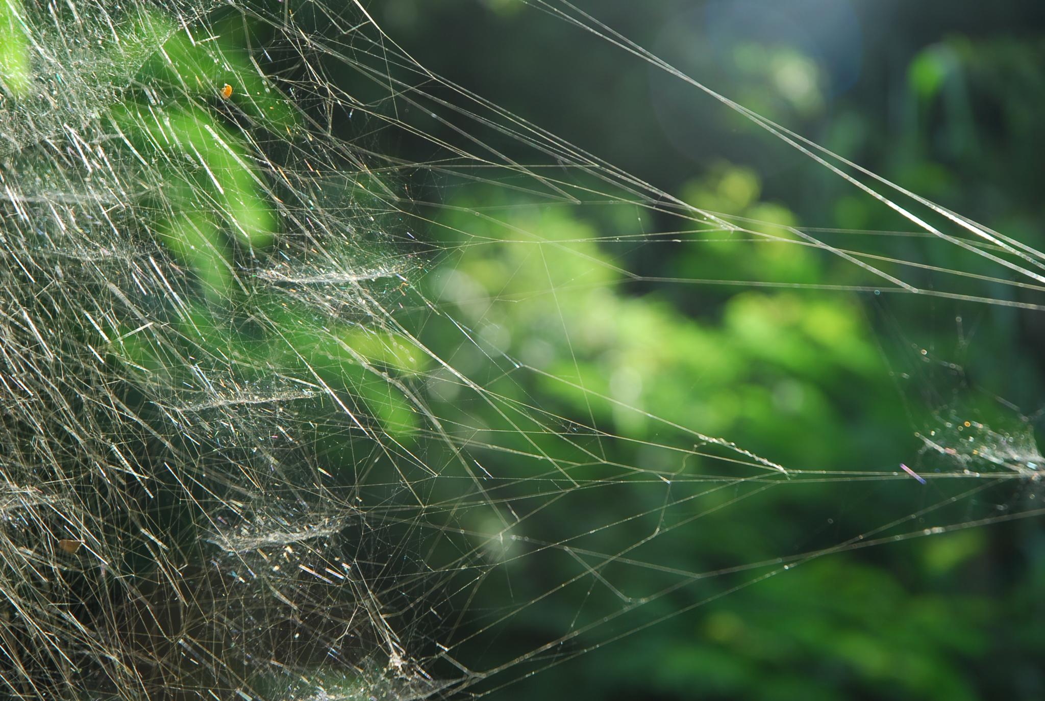 teia de aranha by Eduardo Campanha