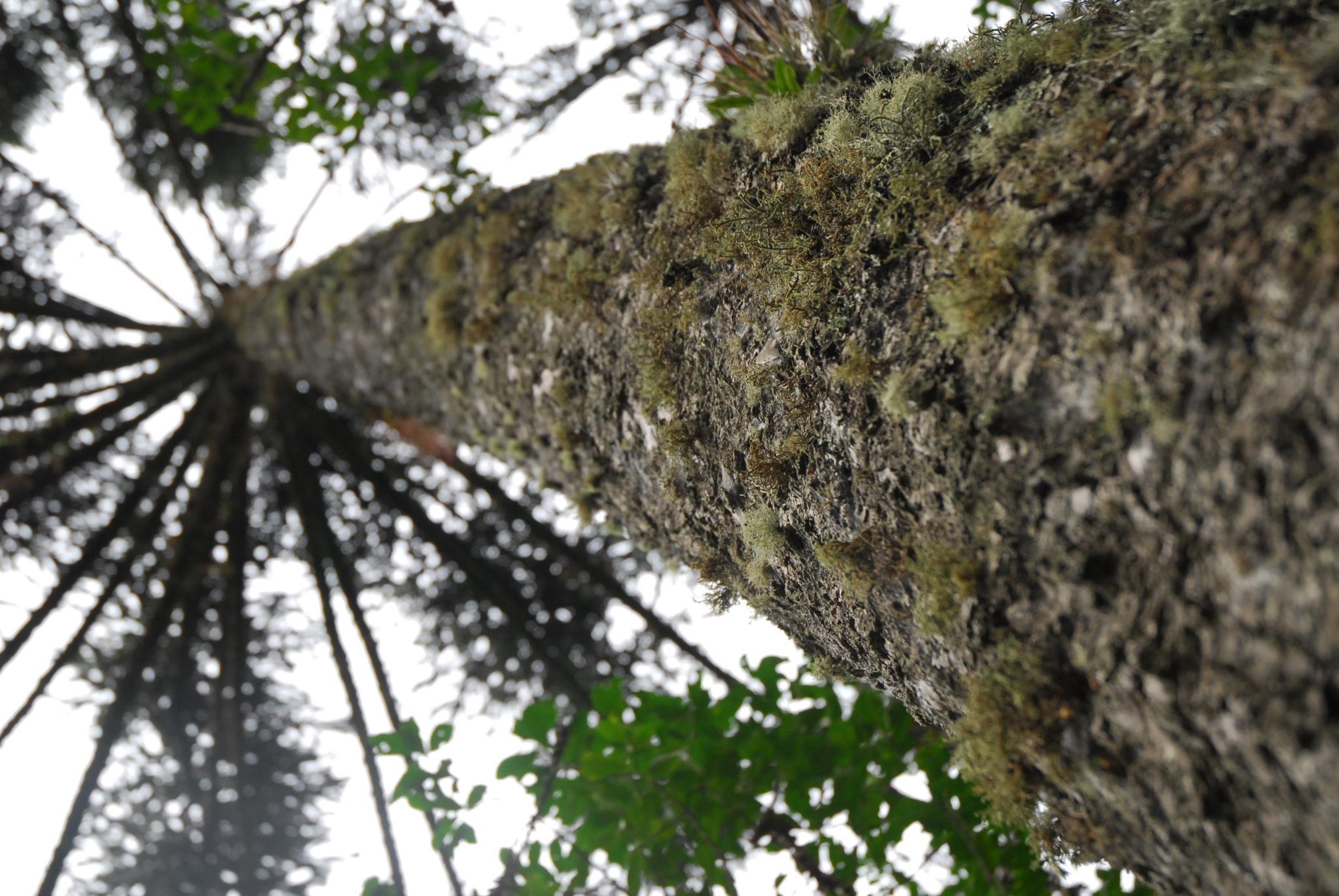Photo in Nature #nature #tree #tripo