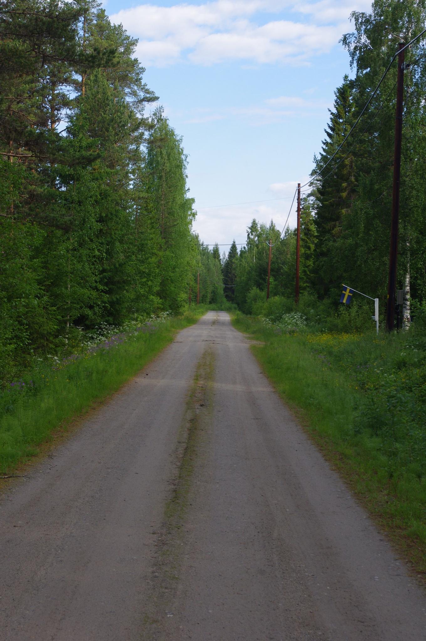 Forestroad by eva.e.mabrouk