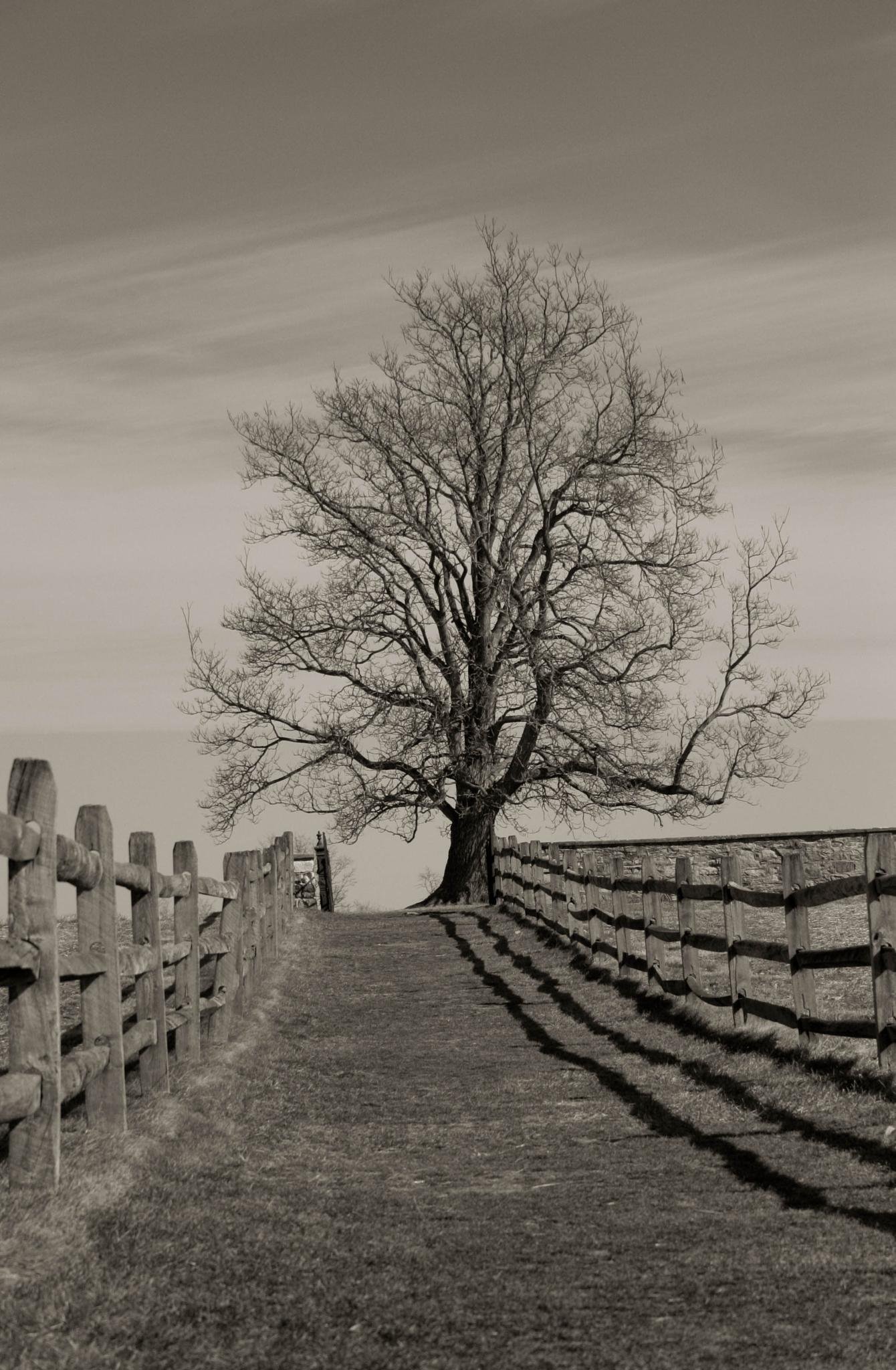 Cemetery Tree by Jeff Slater