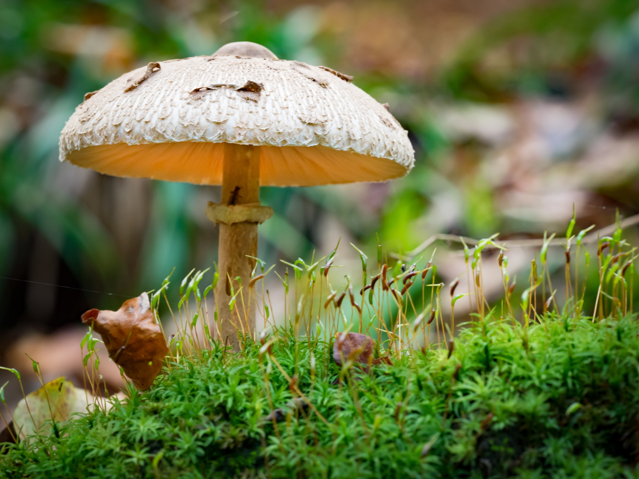 One more Mushroom by pixer