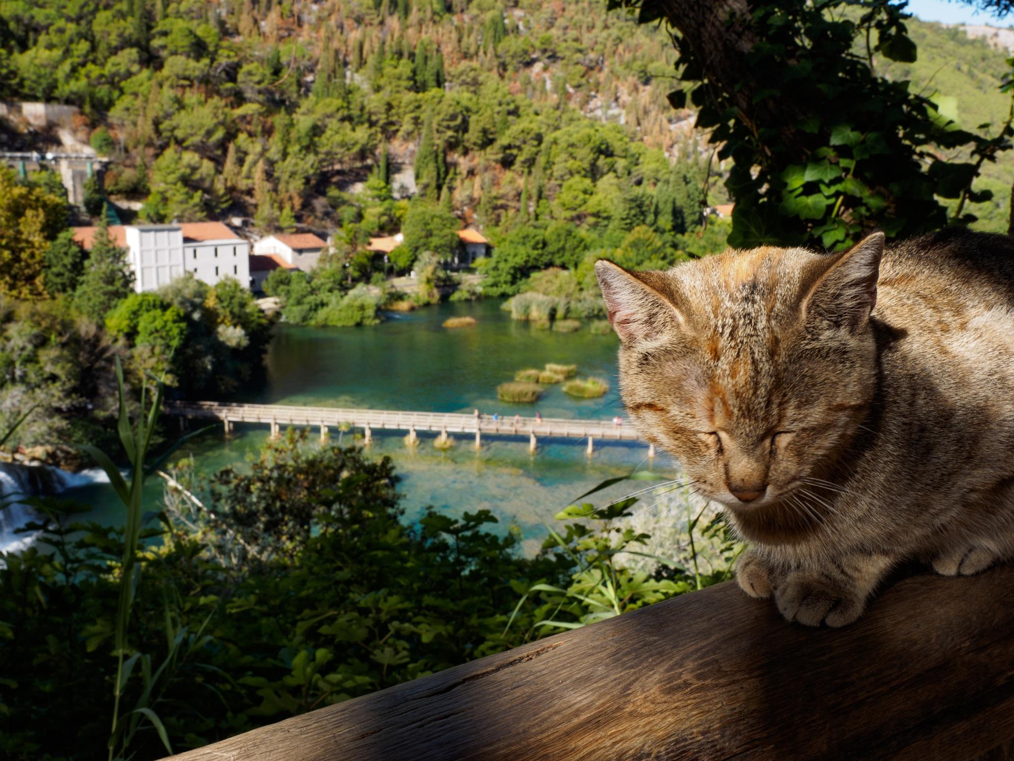 Cat by pixer