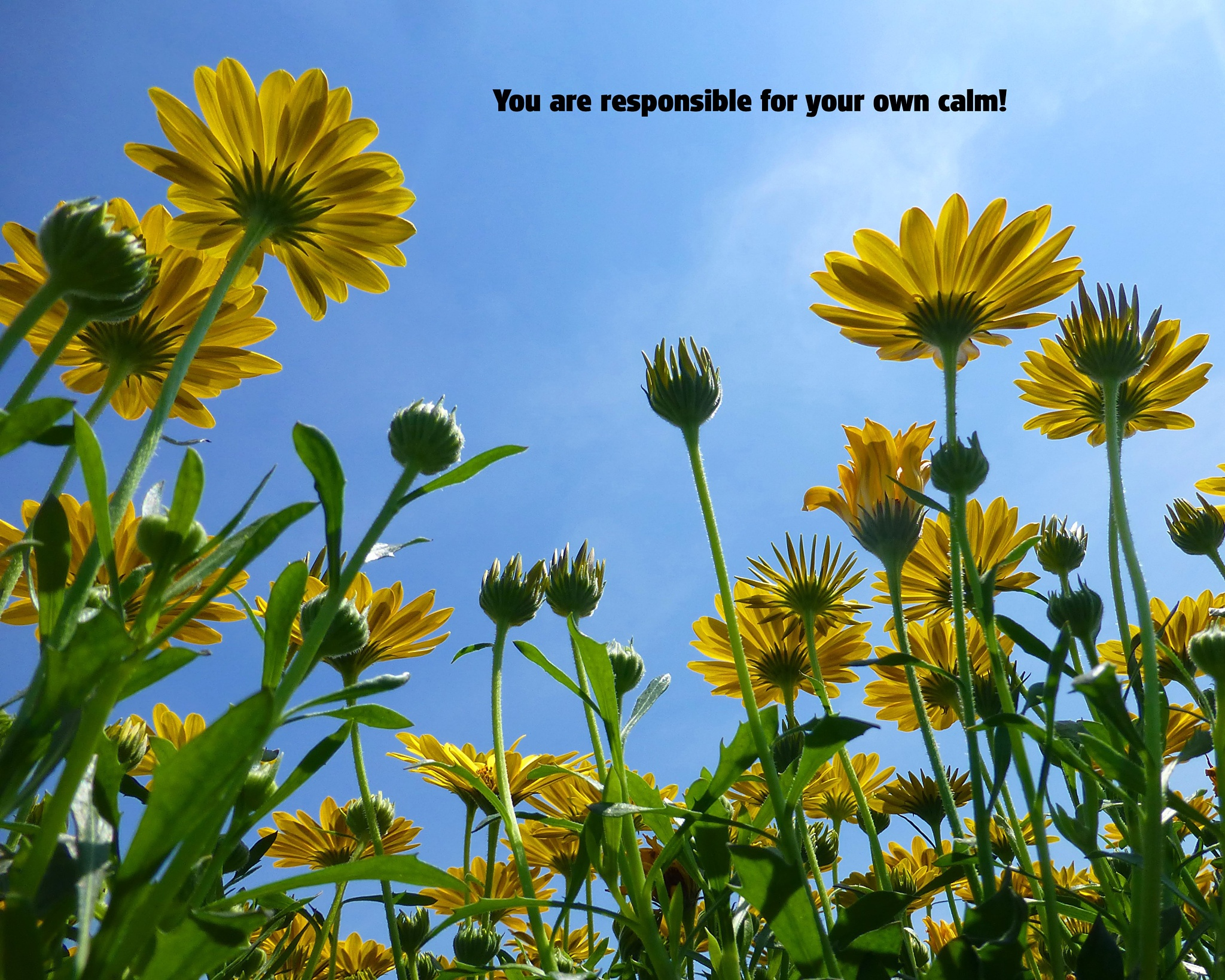 You are responsible for your own calm! by Terri Scache Harris
