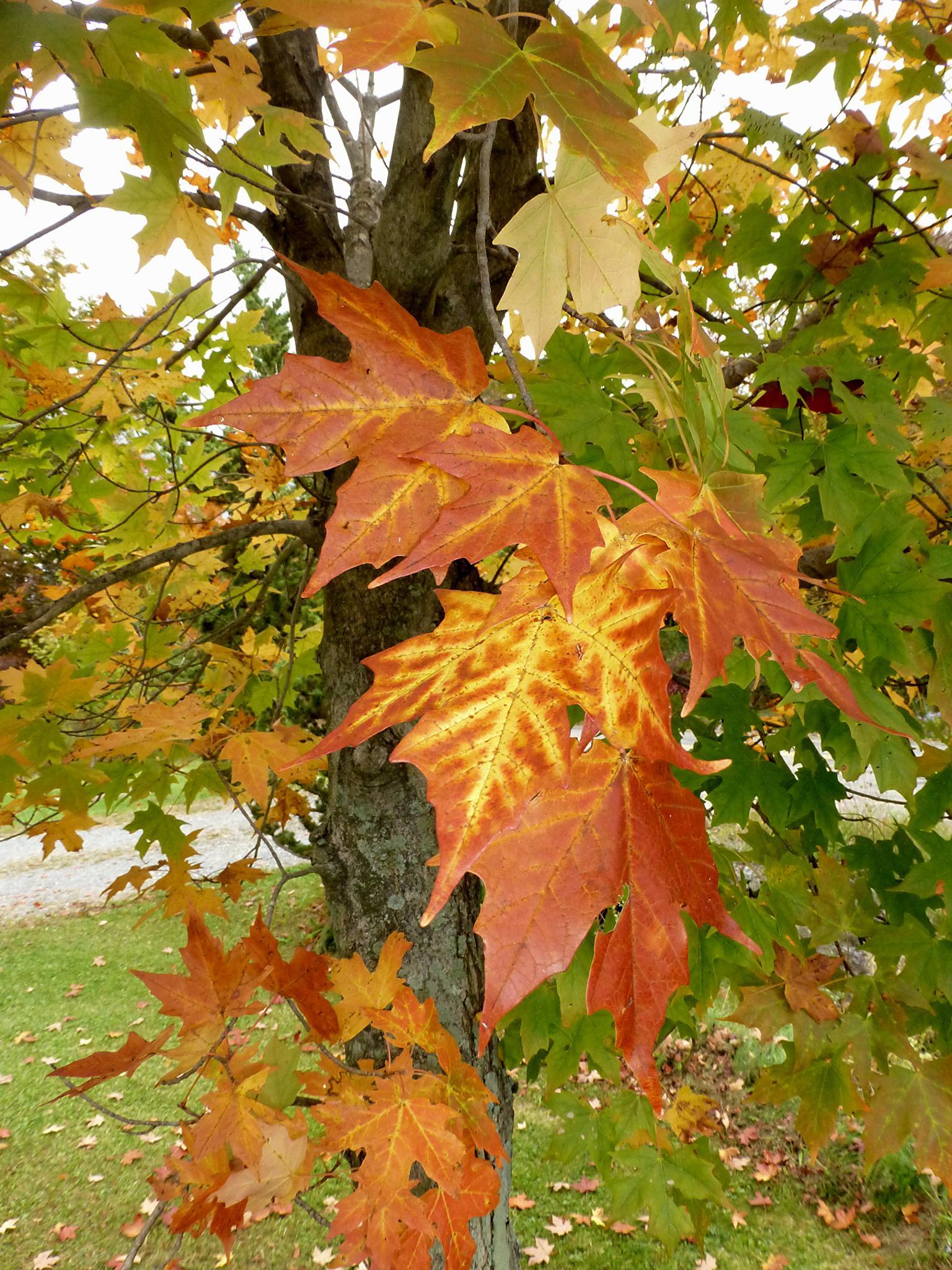 Autumn is in the Air by Terri Scache Harris