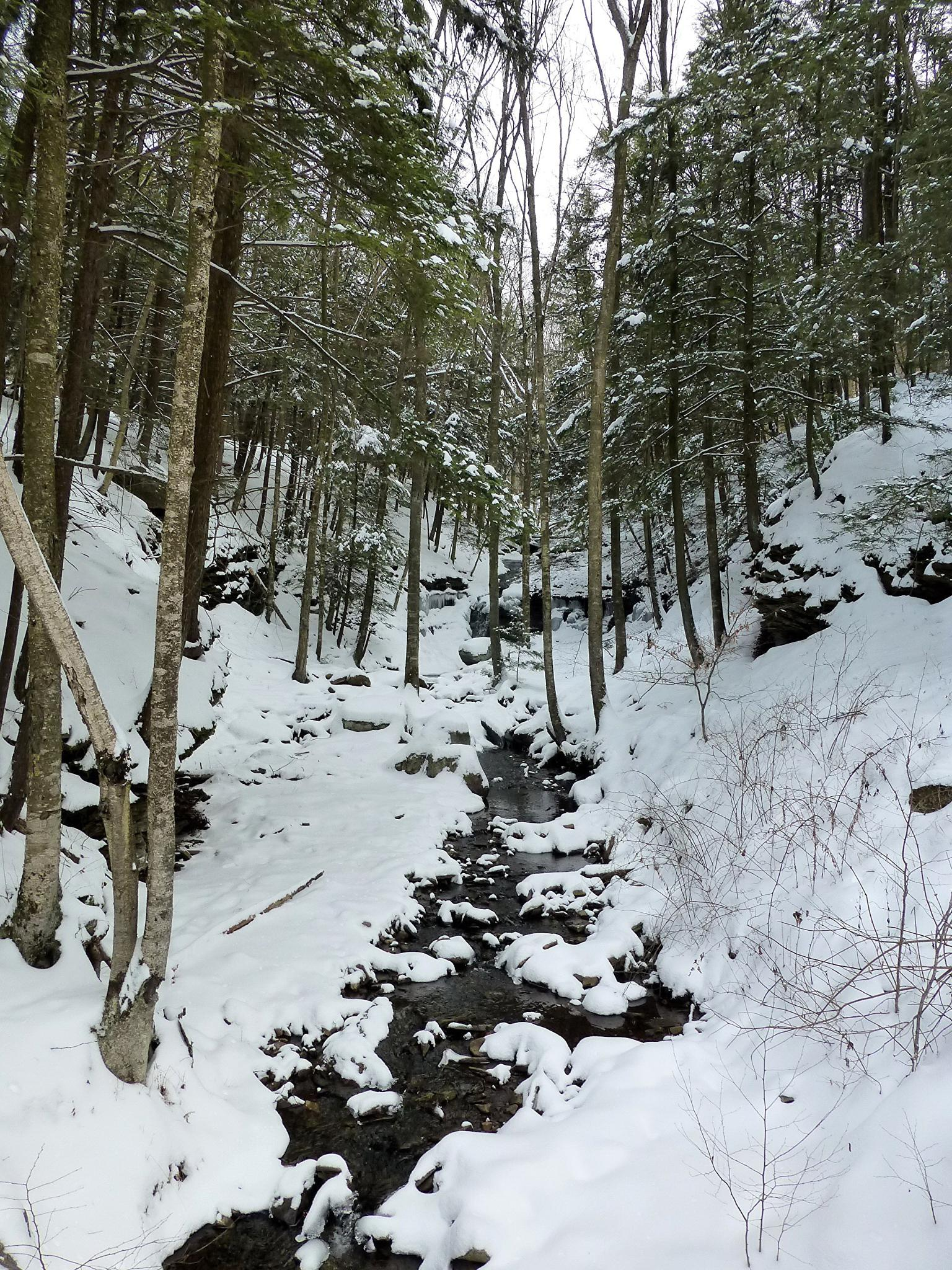 Winter in Worlds End State Park by Terri Scache Harris