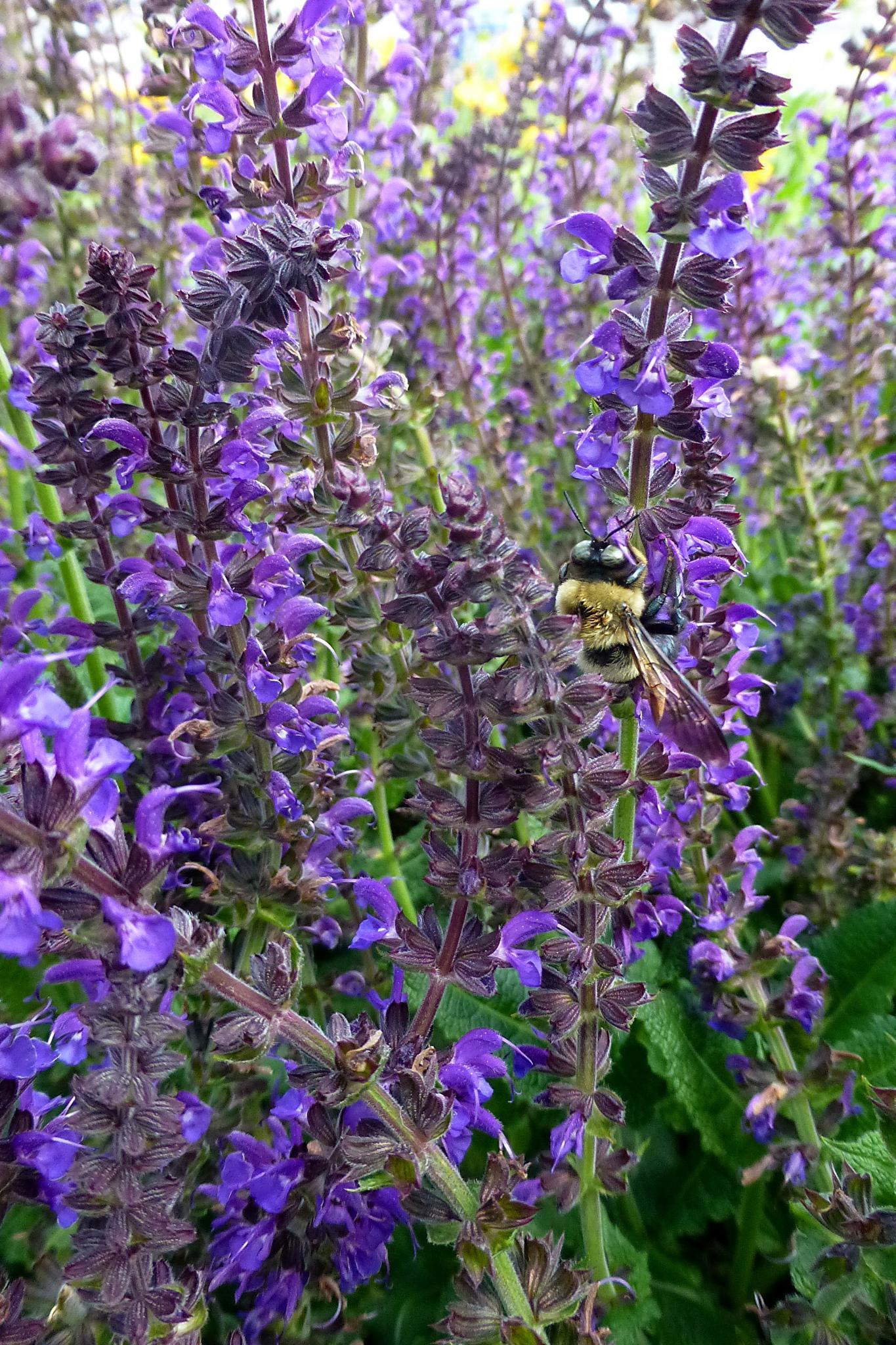 Busy Bee by Terri Scache Harris