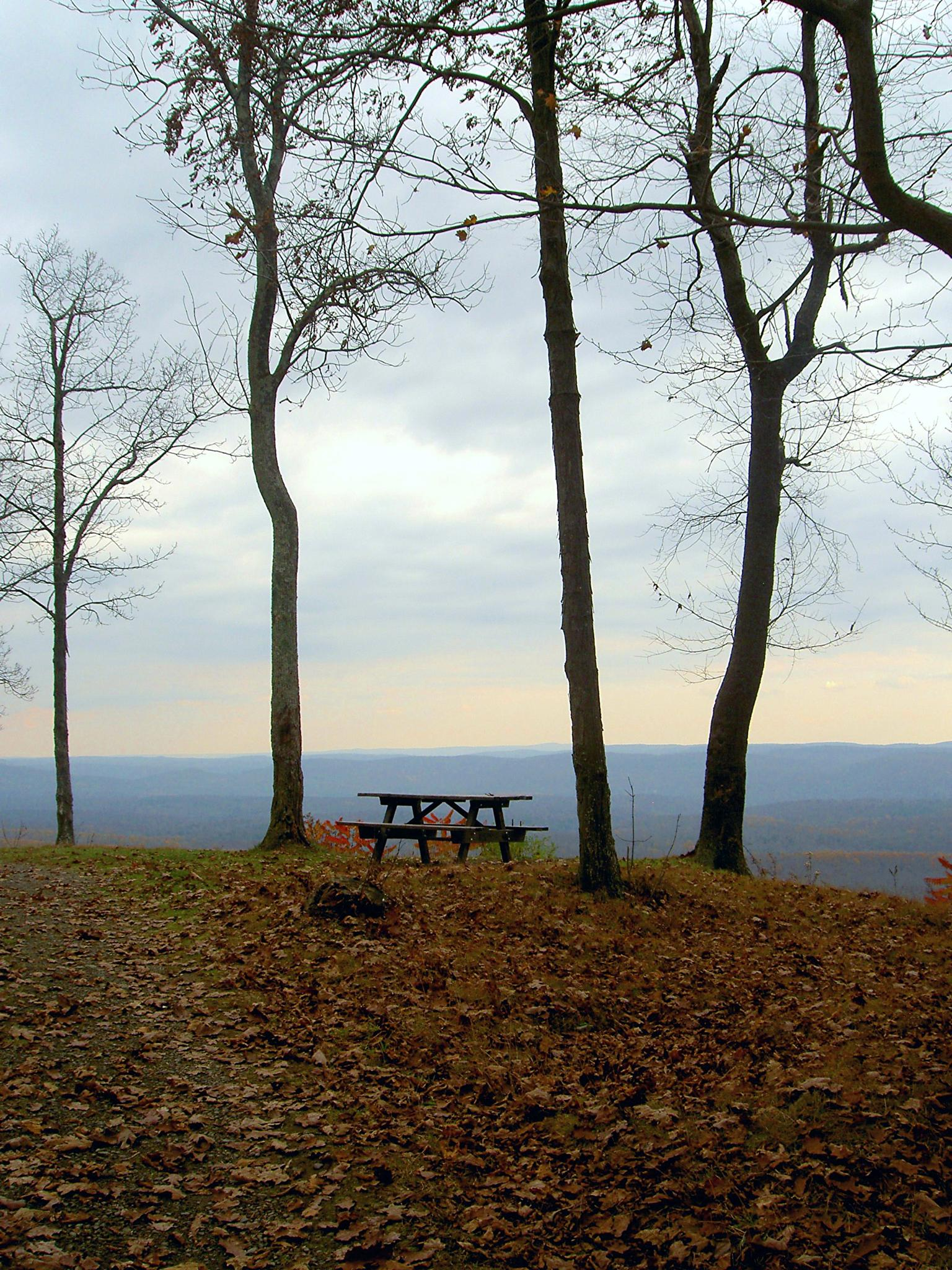 The Lonliest Picnic Table by Terri Scache Harris