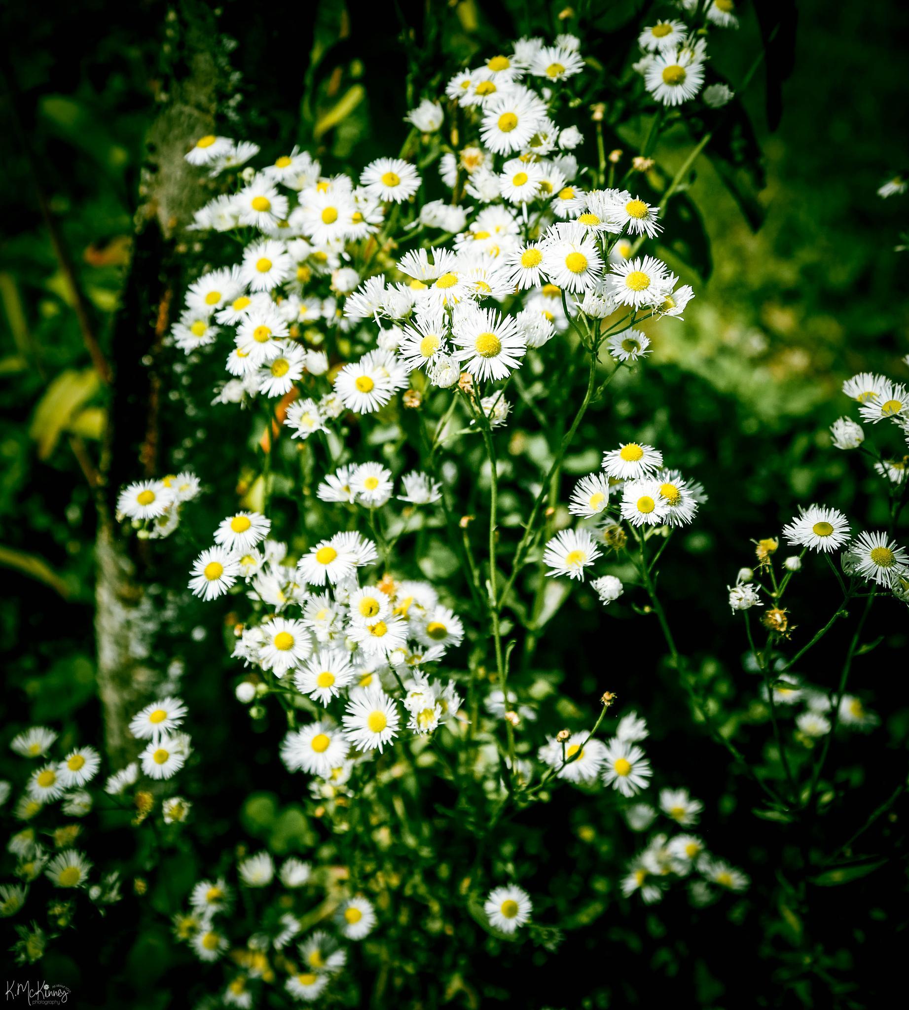 Wildflowers by Karlasue