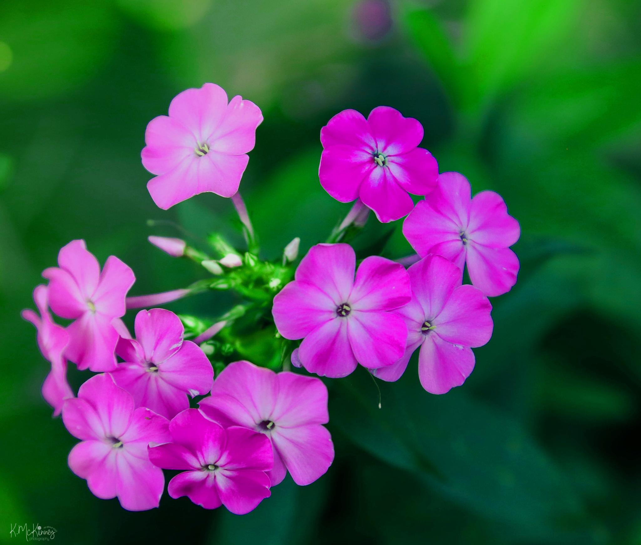 Pretty Petals by Karlasue