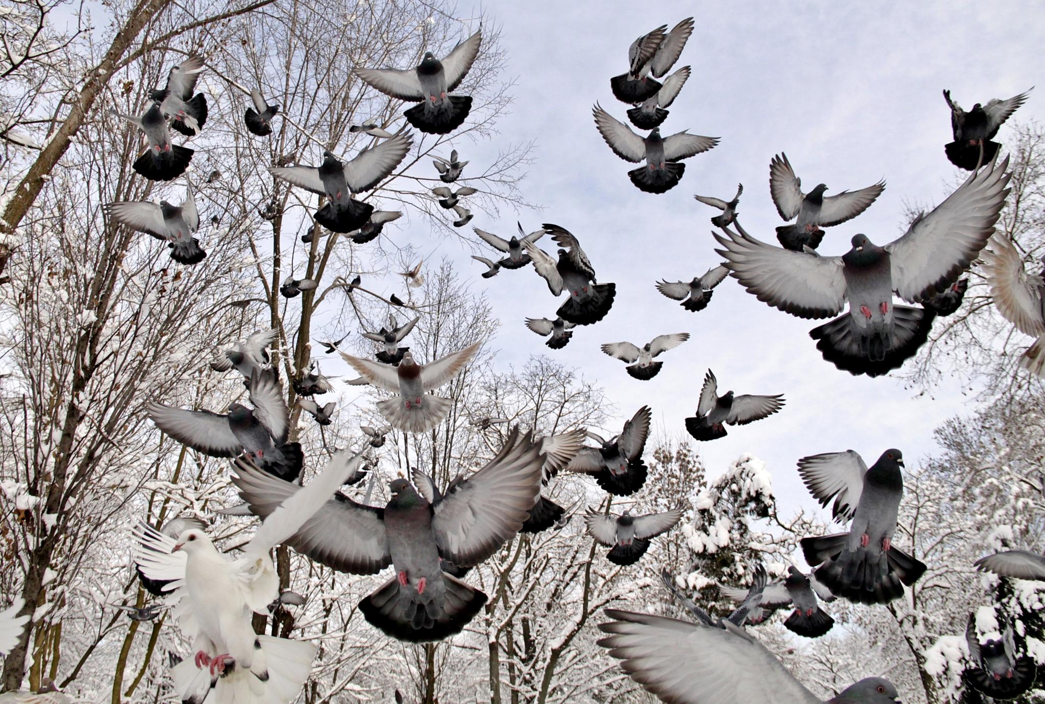 Flight by Sorin Panait
